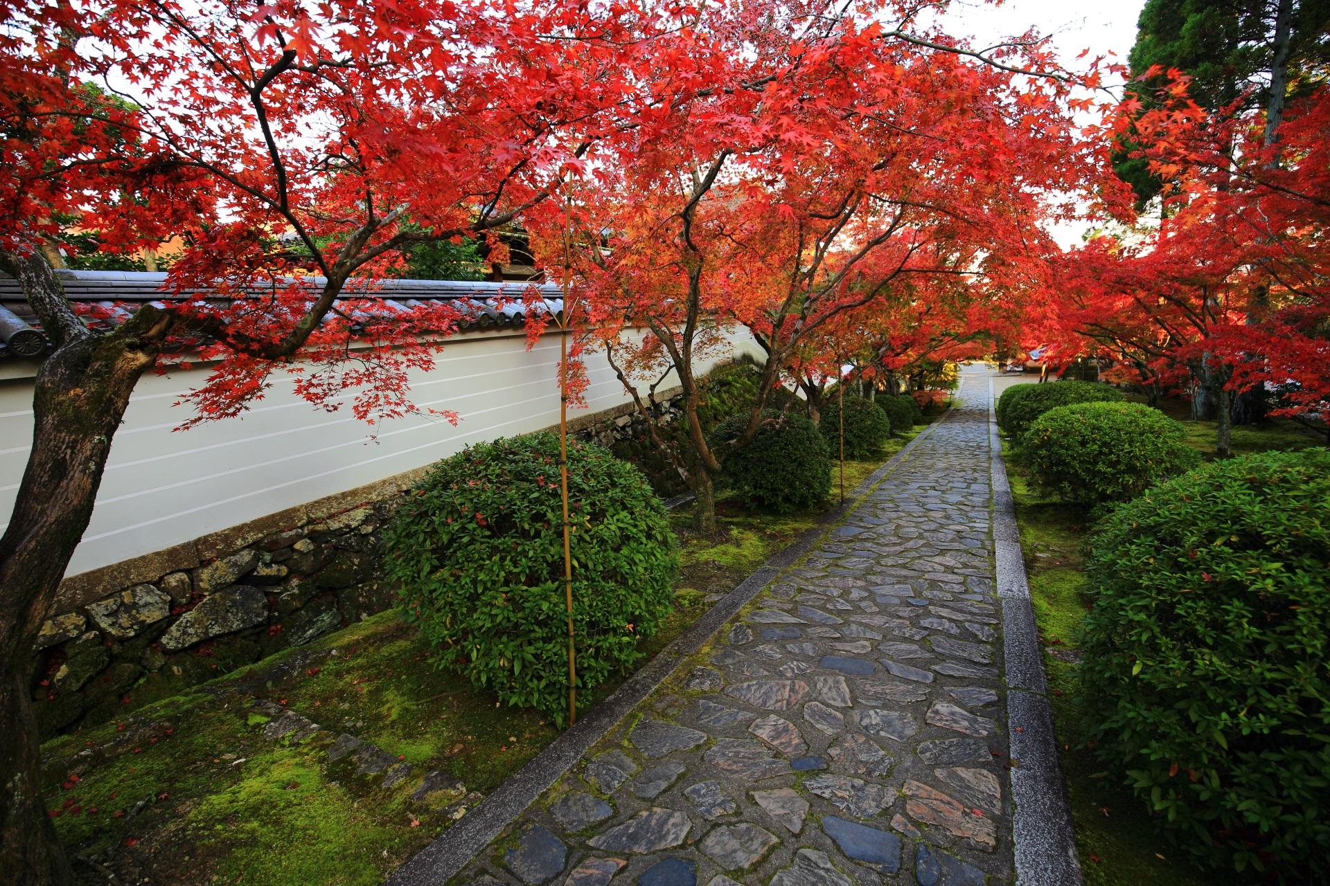上から眺めた参道と紅葉