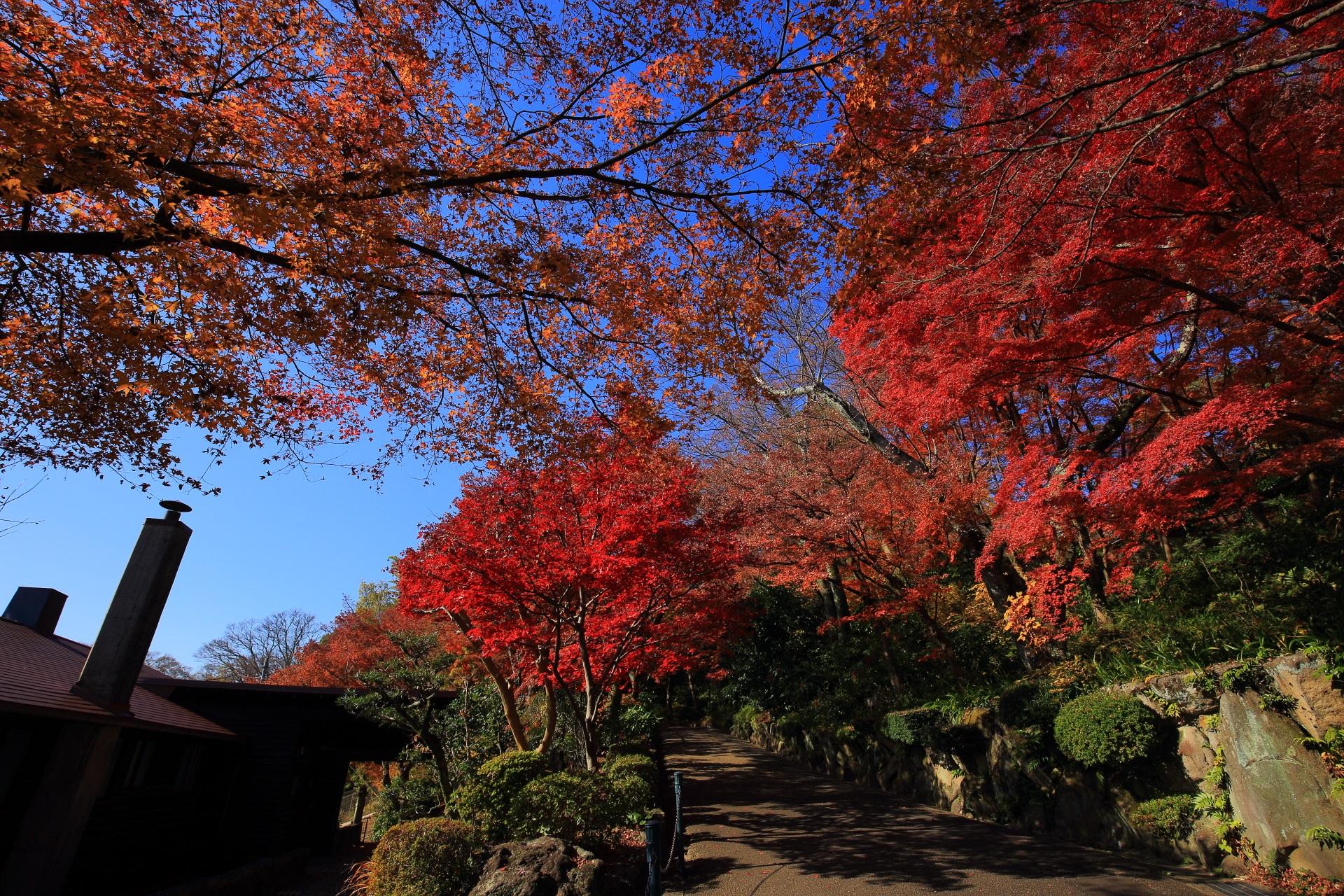 大山崎山荘美術館のトンネルの琅玕洞(ろうかんどう)から少し進んだあたりの紅葉で