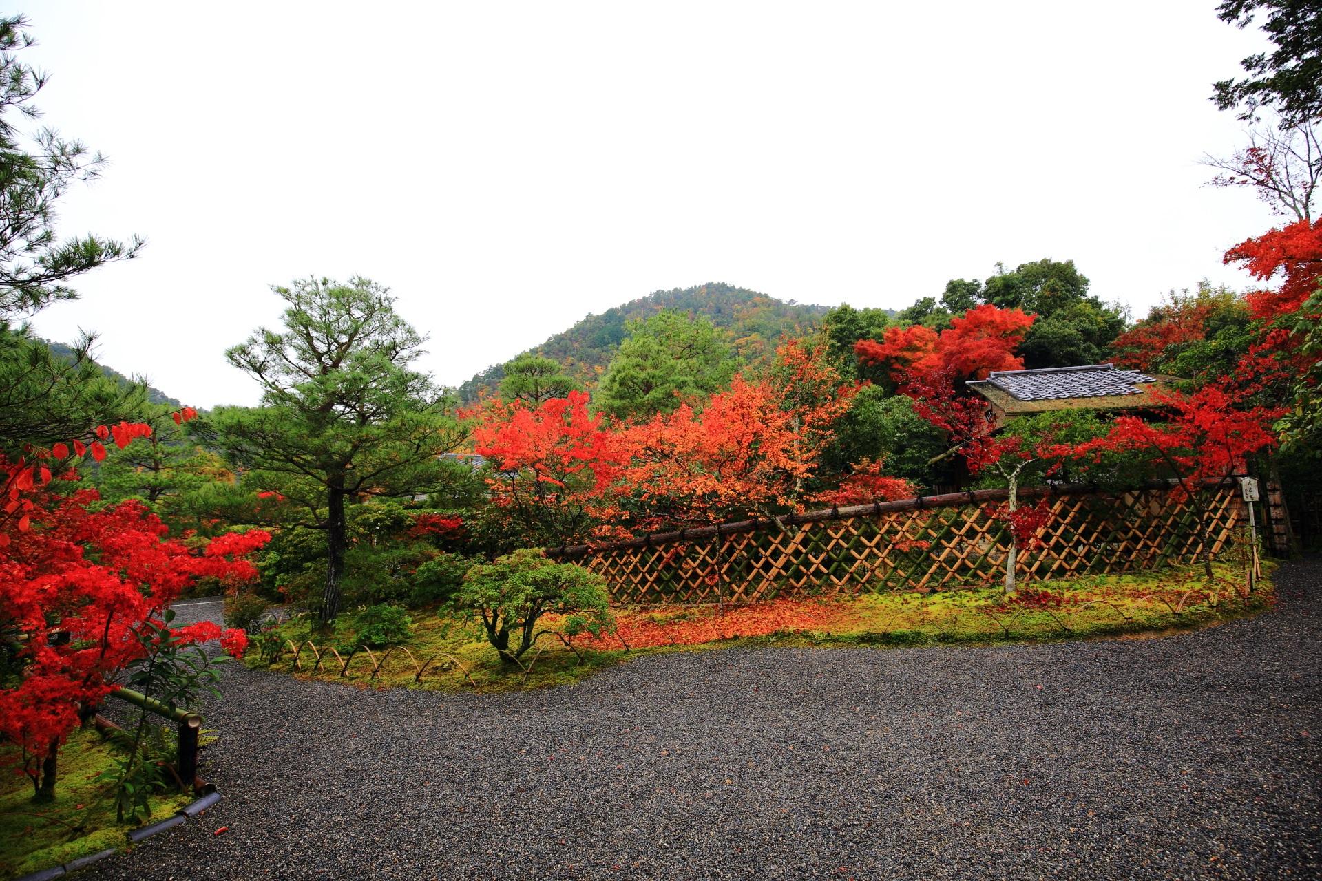 多彩な紅葉が華やぐ光悦寺の光悦垣