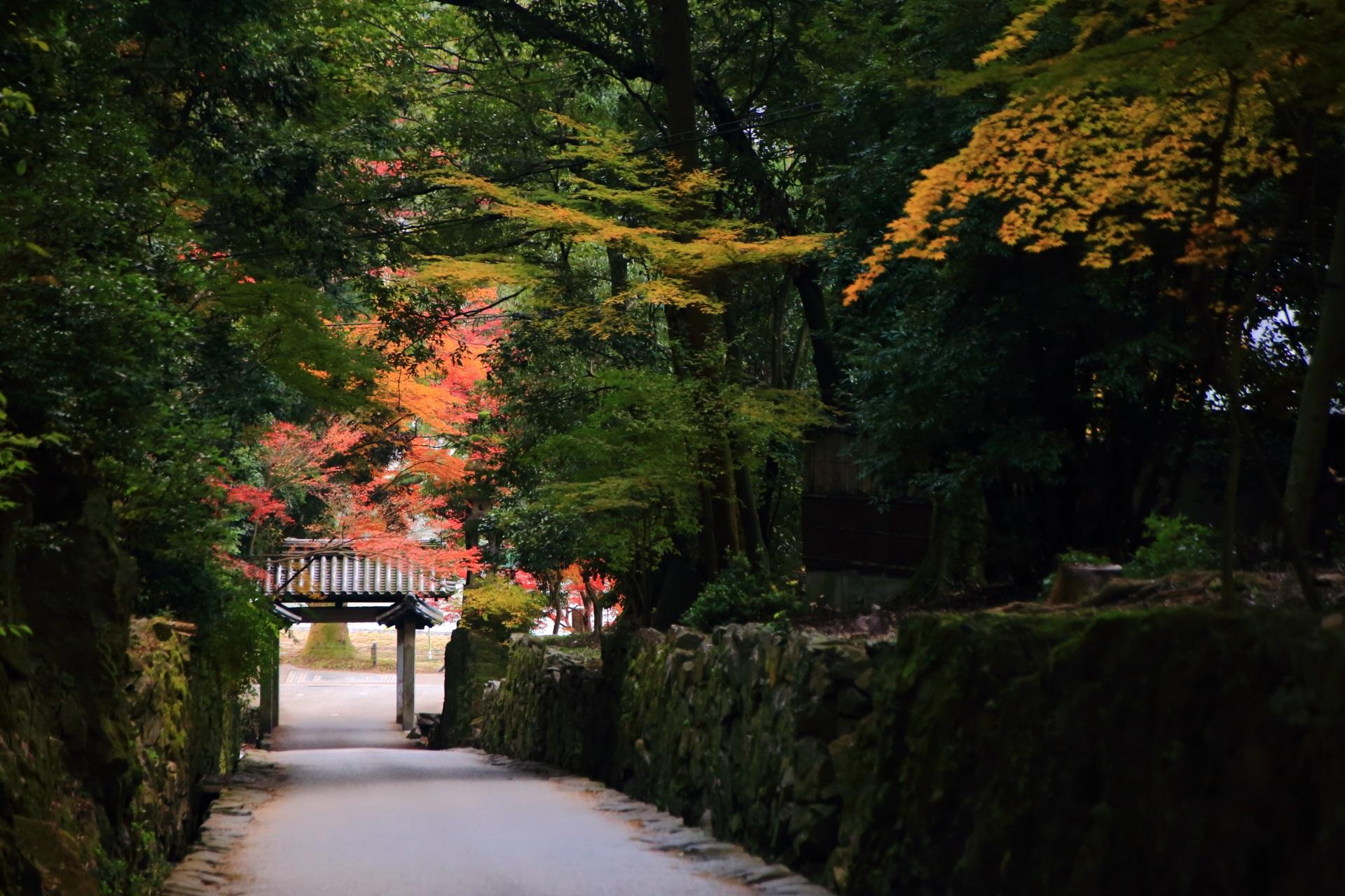 多種多様な木々につつまれた琴坂と紅葉の華やぐ興聖寺の石門
