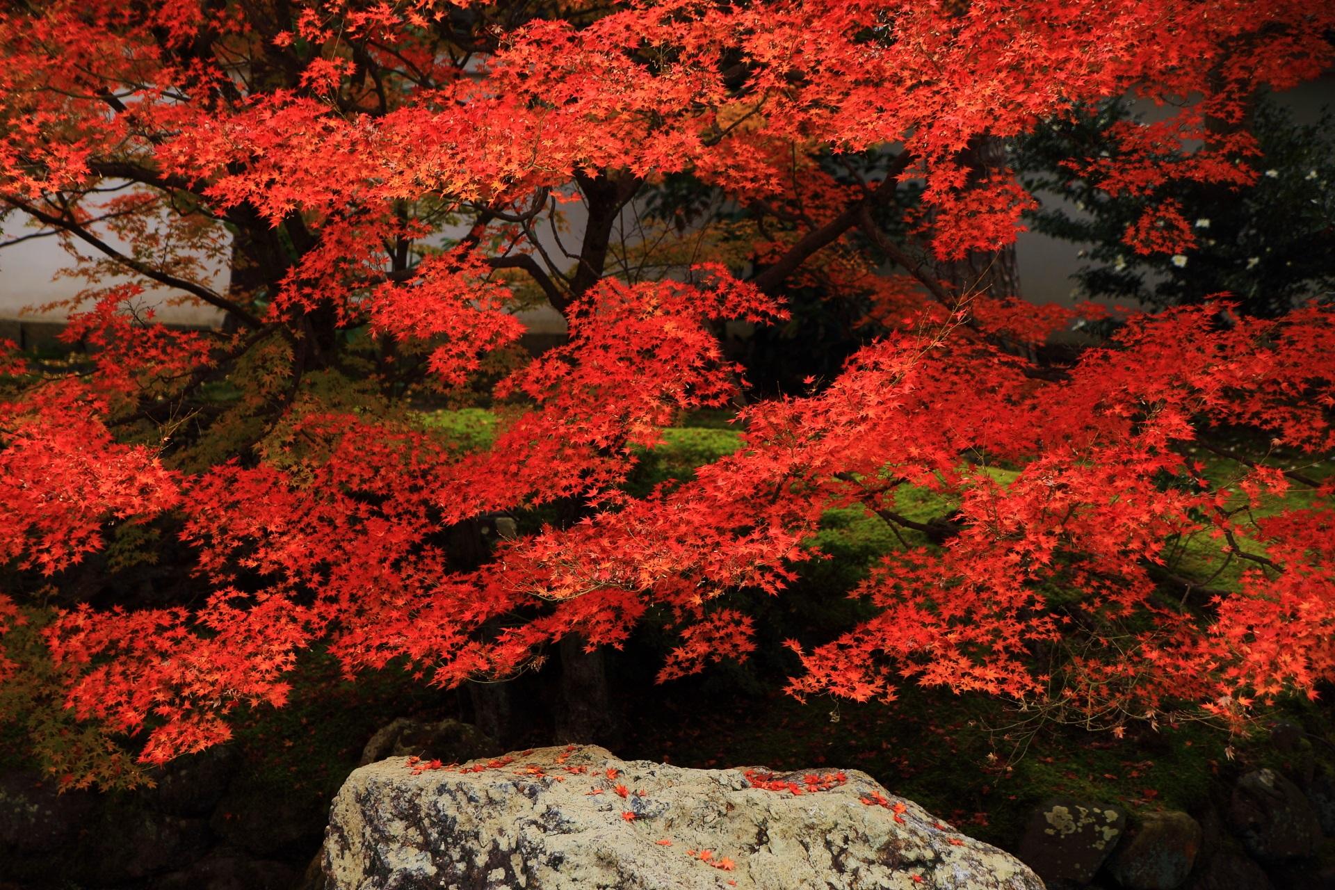 綺麗な秋色の見事な紅葉