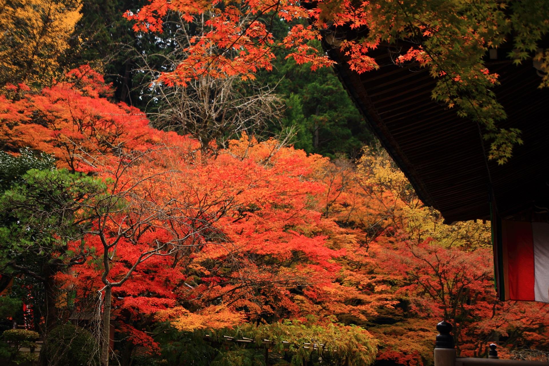 本堂裏から眺めたまだまだ見ごろが続く大師堂の紅葉