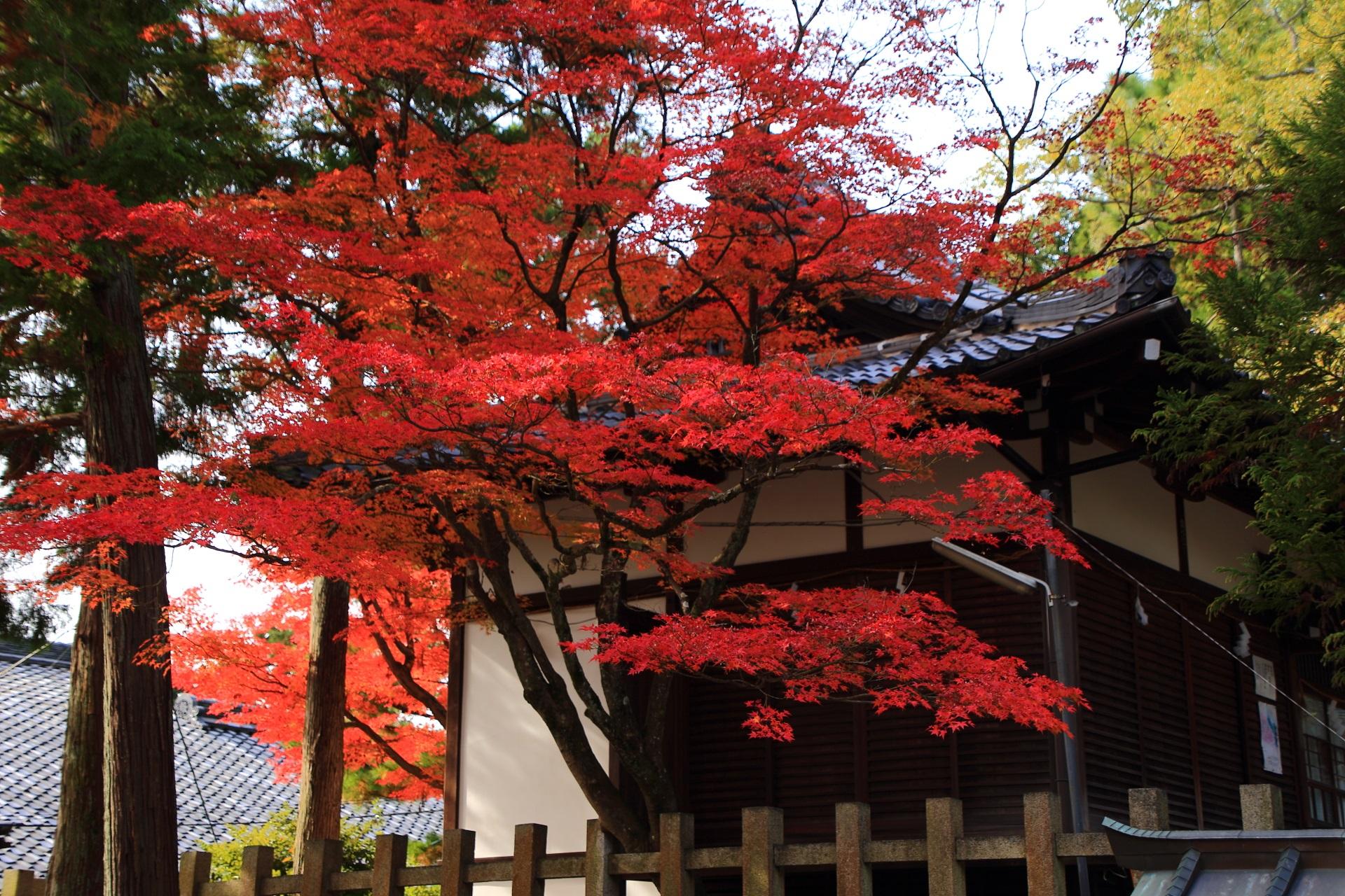 秋色に染まる宗忠神社の境内