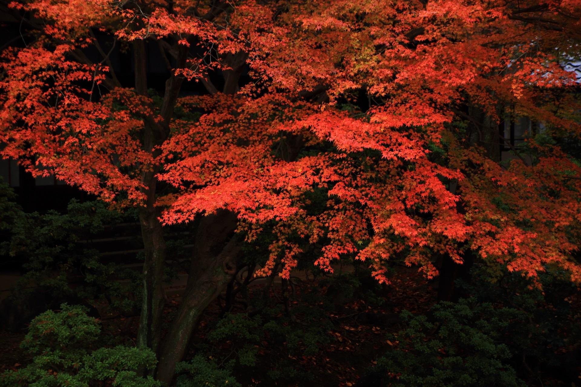 趣きある庭園で浮かび上がる深い色合いの紅葉