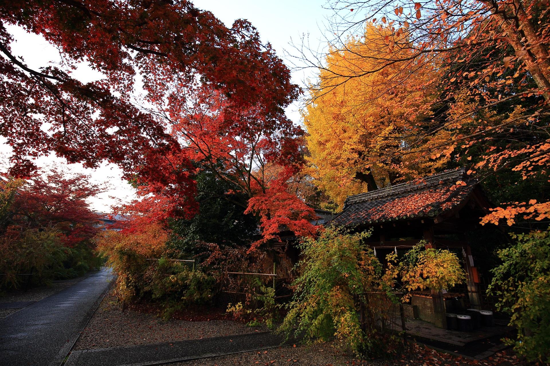 梨木神社の「染井の水」付近の紅葉や銀杏