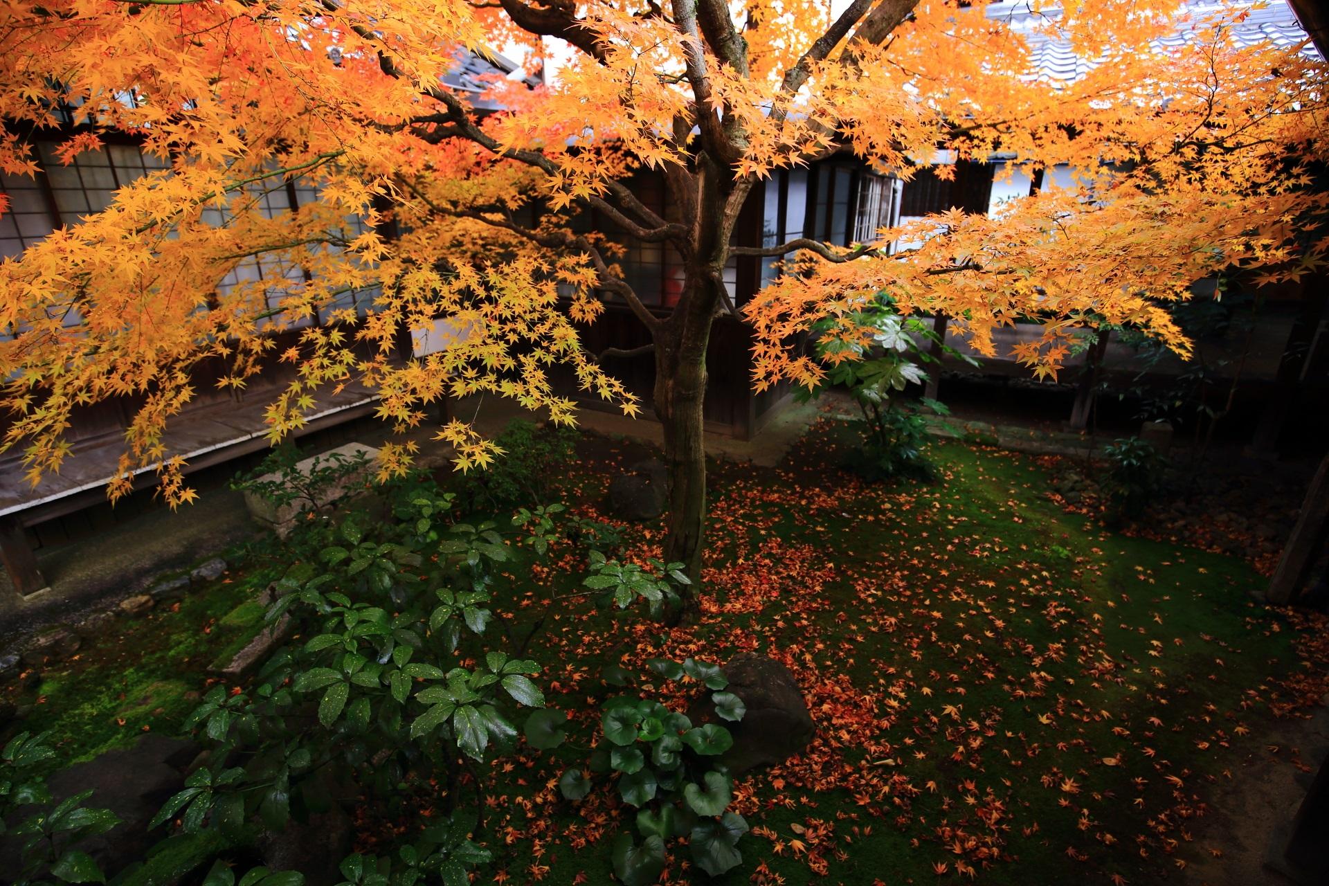 本法寺の多種多様な緑を彩る煌びやかな紅葉