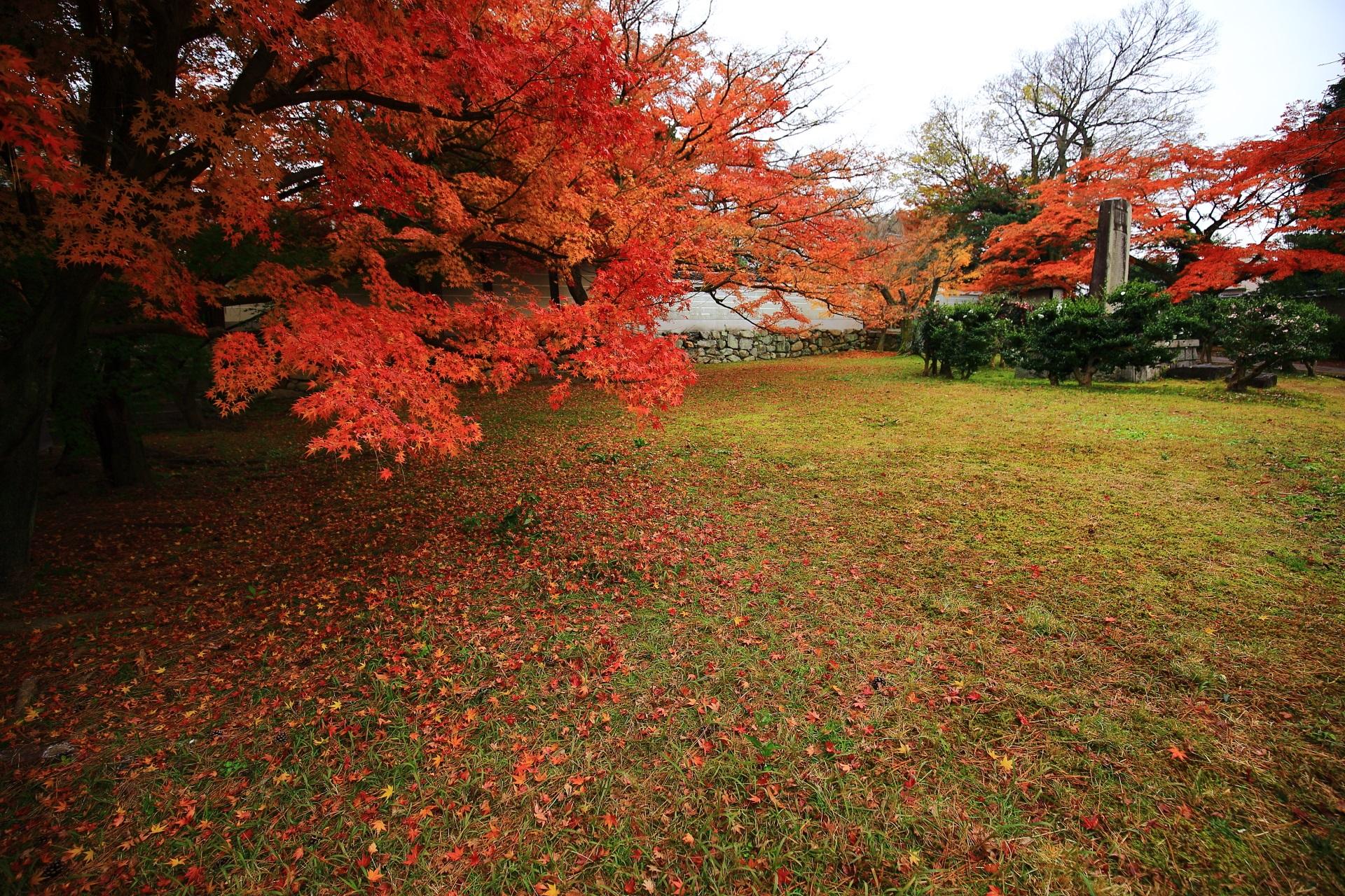 養源院の勅使門前の雄大な紅葉と散り紅葉