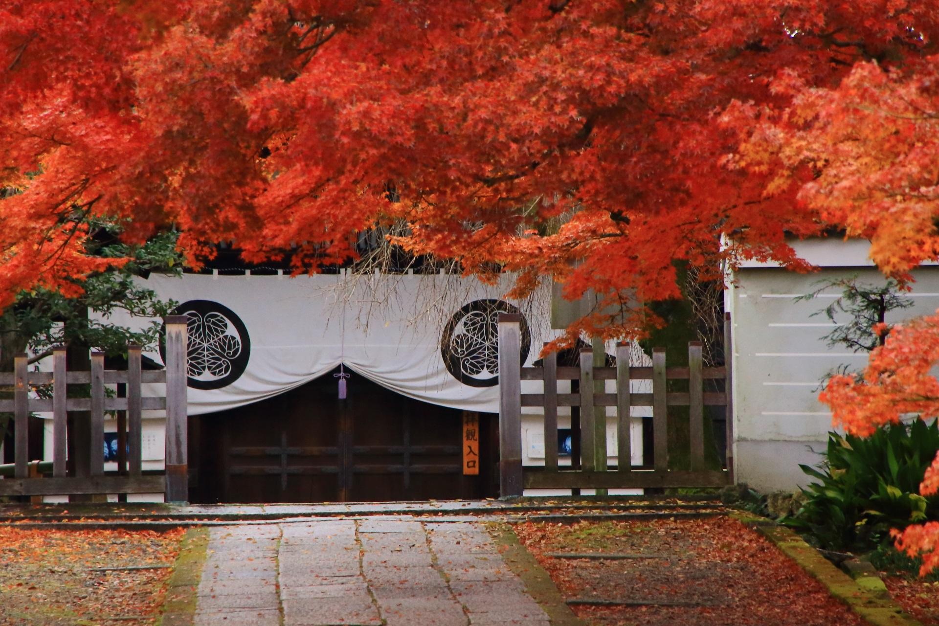 養源院の溢れる紅葉の先に佇む玄関