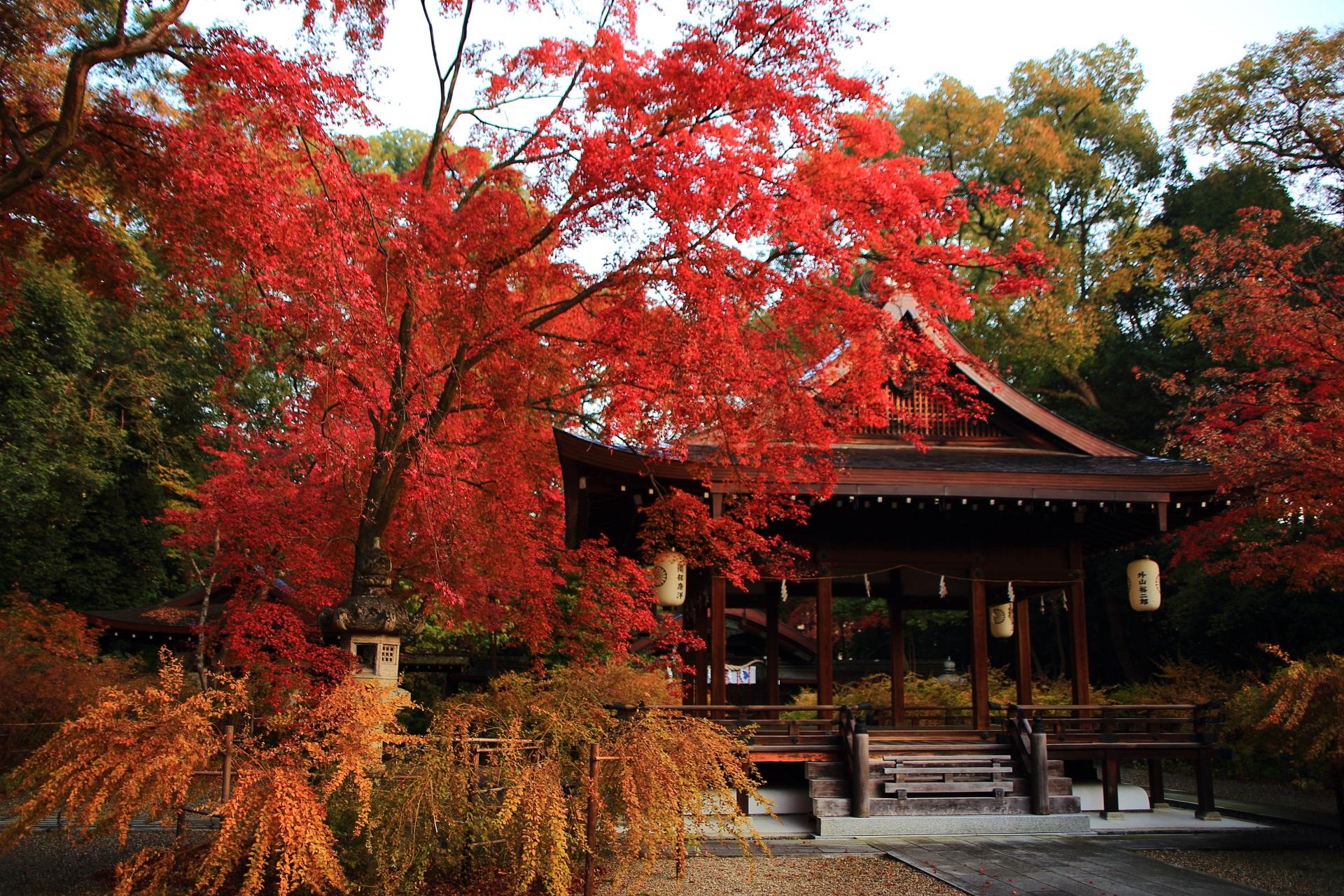 淡い朝日を浴びて煌く紅葉
