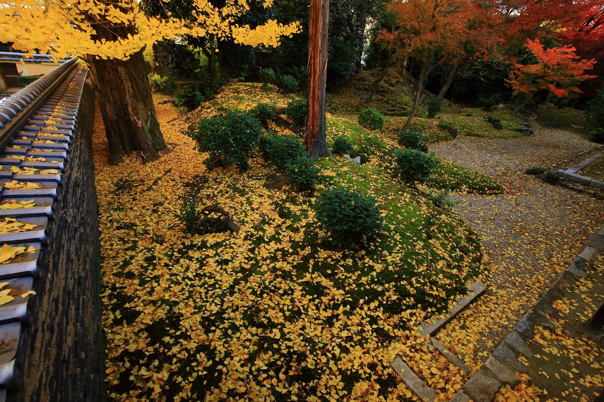 立本寺の土塀と苔を彩る圧巻の散り銀杏
