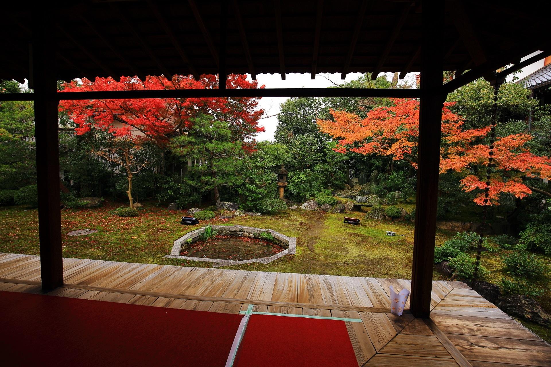 本法寺の風情ある庭園を染めるオレンジと赤の鮮やかな紅葉