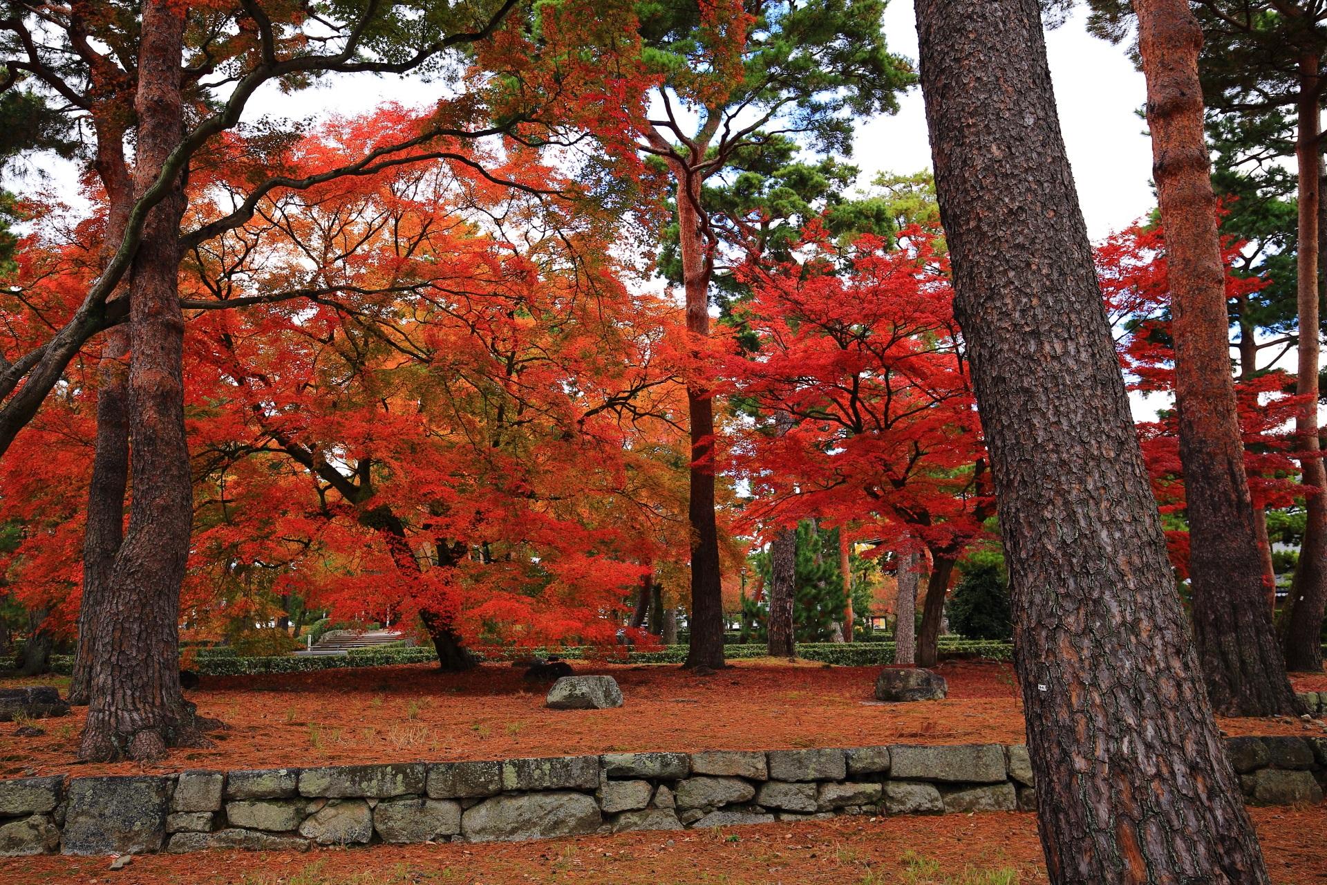 静かな境内を彩る赤とオレンジの鮮やかな紅葉