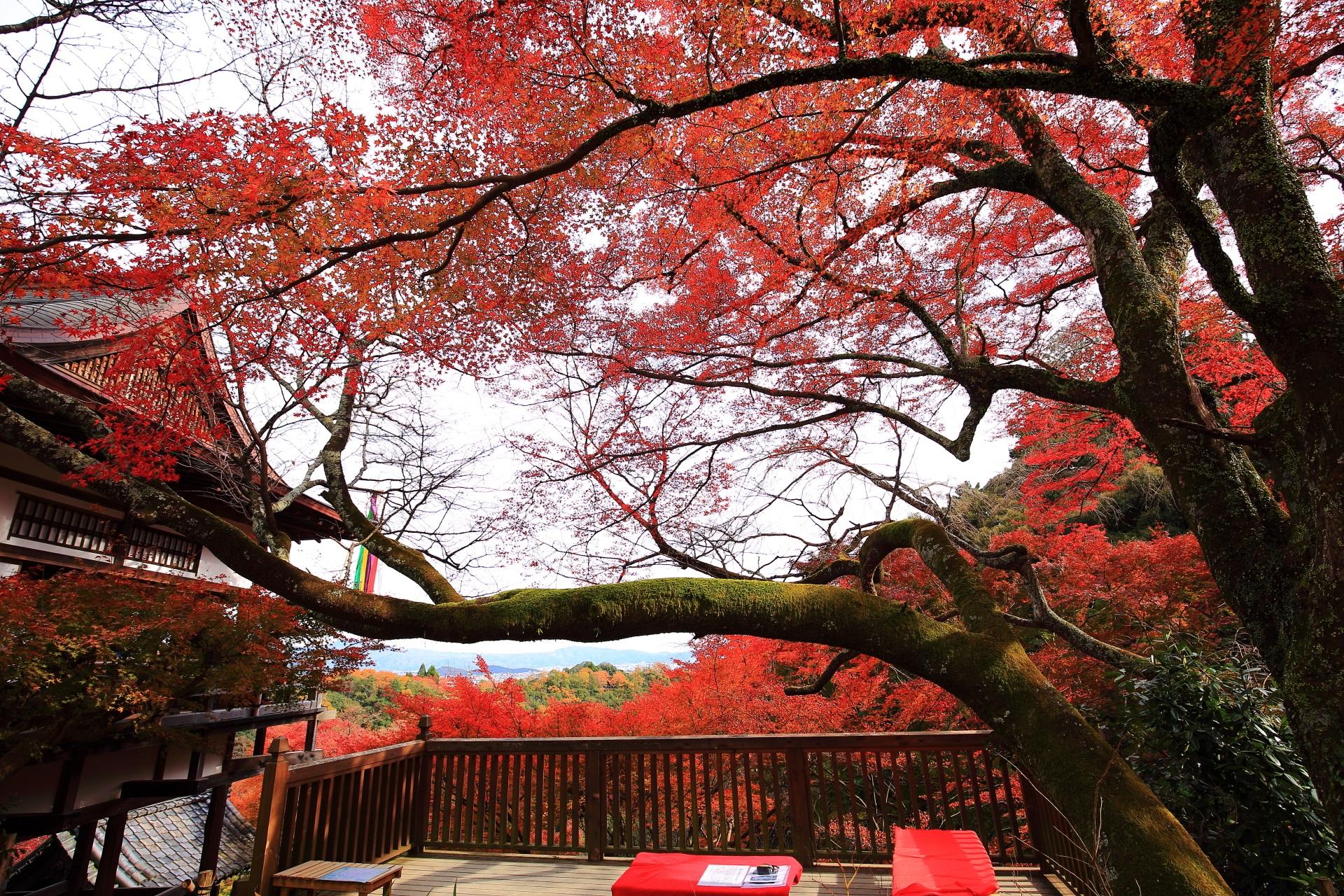 大悲閣千光寺の観音堂と茶所をつつむ雄大な紅葉
