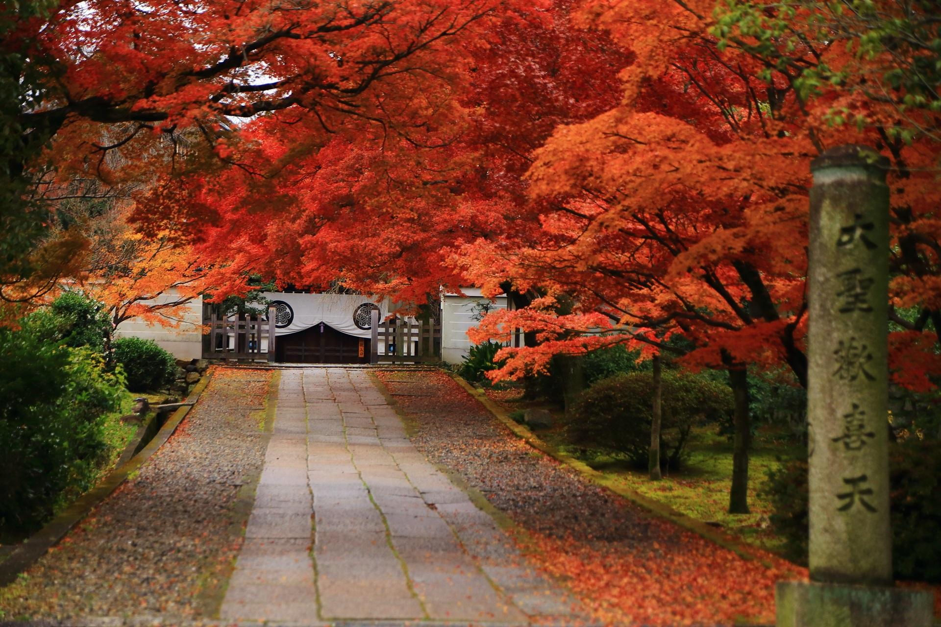 養源院の玄関前の素晴らしい紅葉と秋の情景