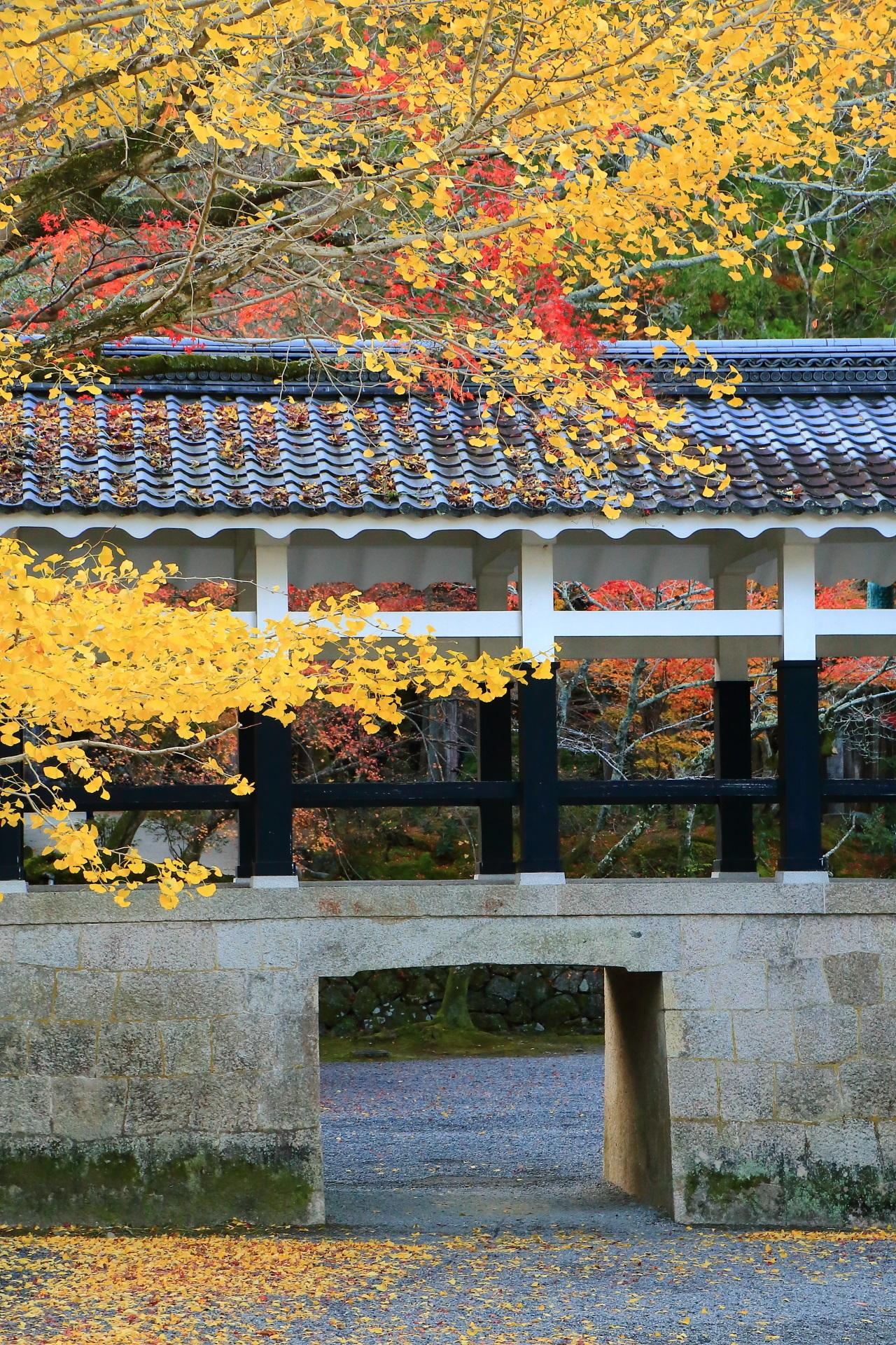 南禅寺の回廊を染める華やかな黄色い銀杏