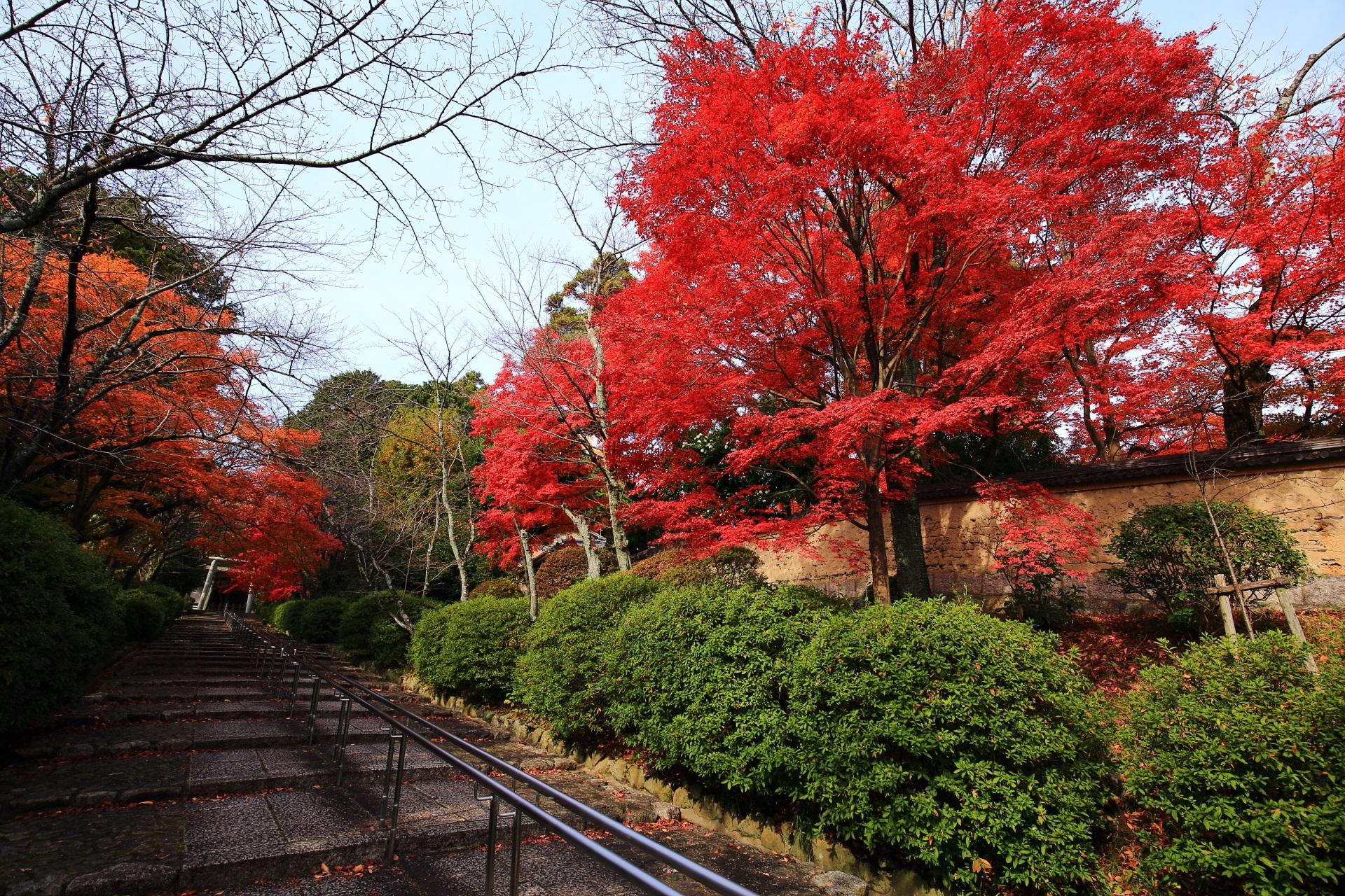 石段の下から見上げた風情ある秋色が広がる紅葉と鳥居