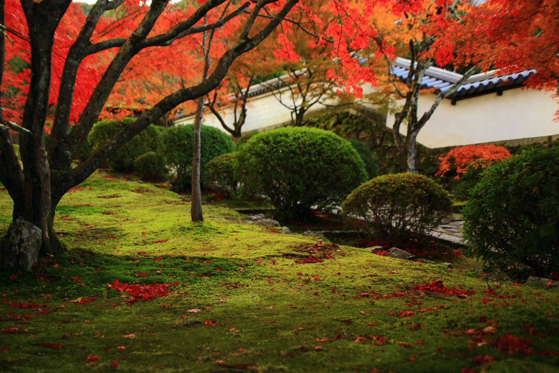 参道脇の苔と散り紅葉