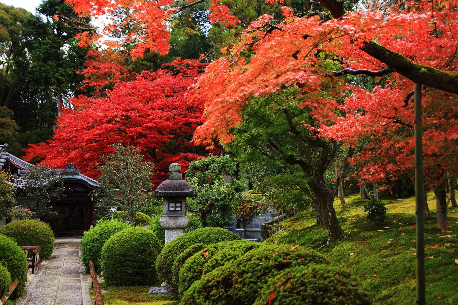 参道の美しすぎる秋の彩りと見事な色のコントラスト