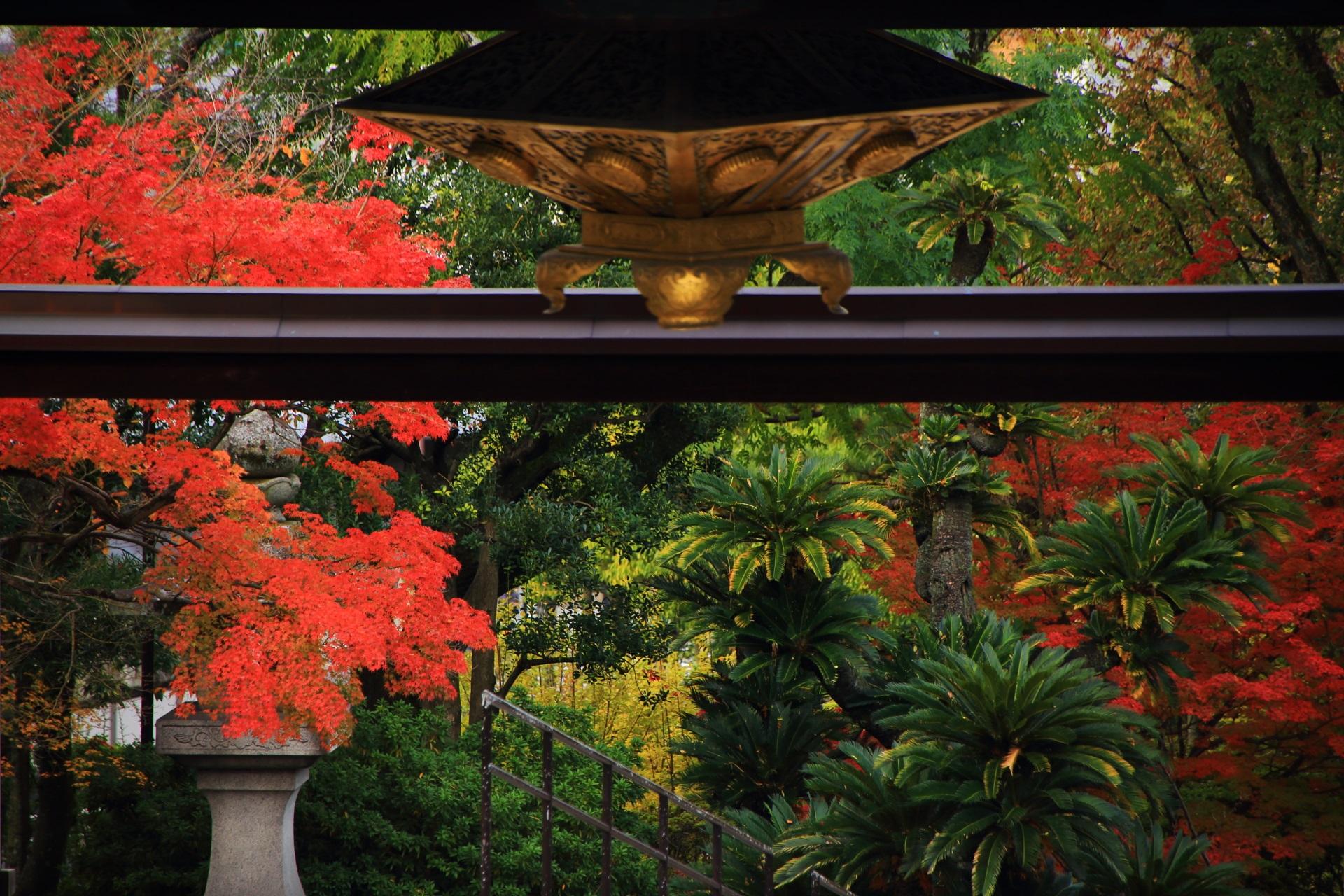大谷本廟の総門と華やかな紅葉