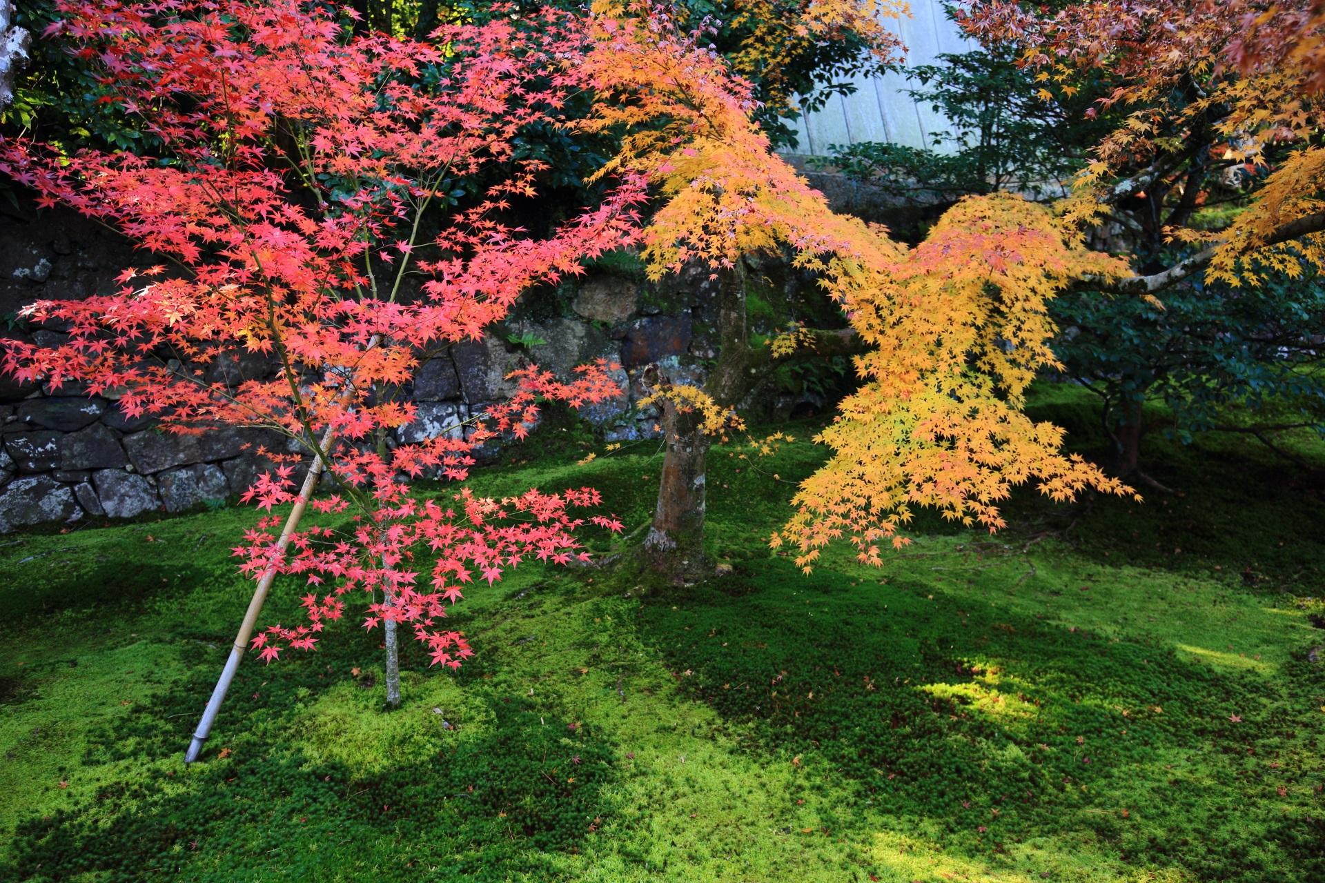 中門前の参堂の色とりどりの紅葉