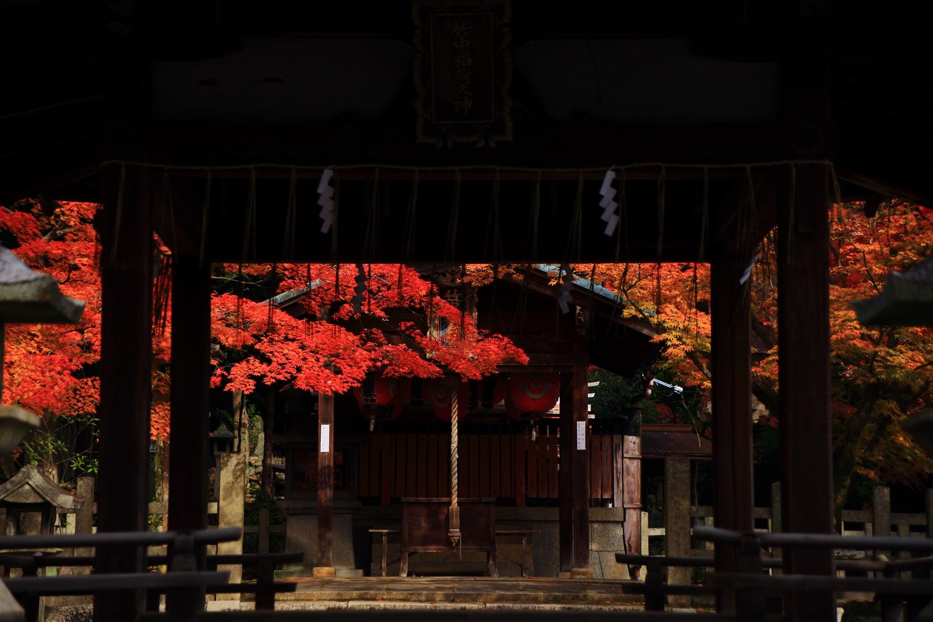 拝殿から眺めた本殿を染める艶やかな秋色