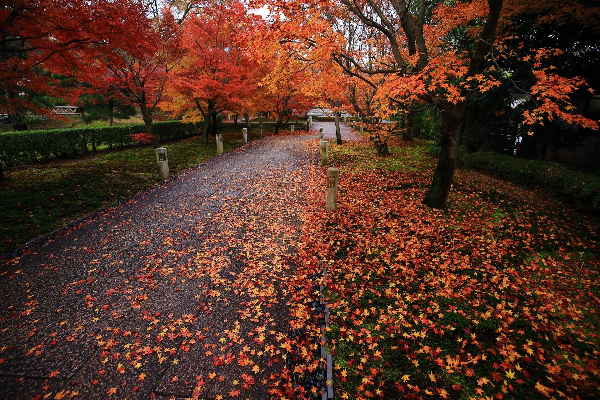 智積院の石畳の参道と苔を彩る華やかな散り紅葉