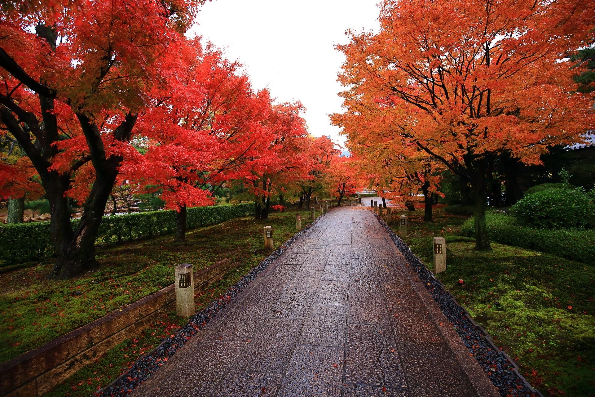 智積院の鐘楼に続く石畳の参道の見事な紅葉