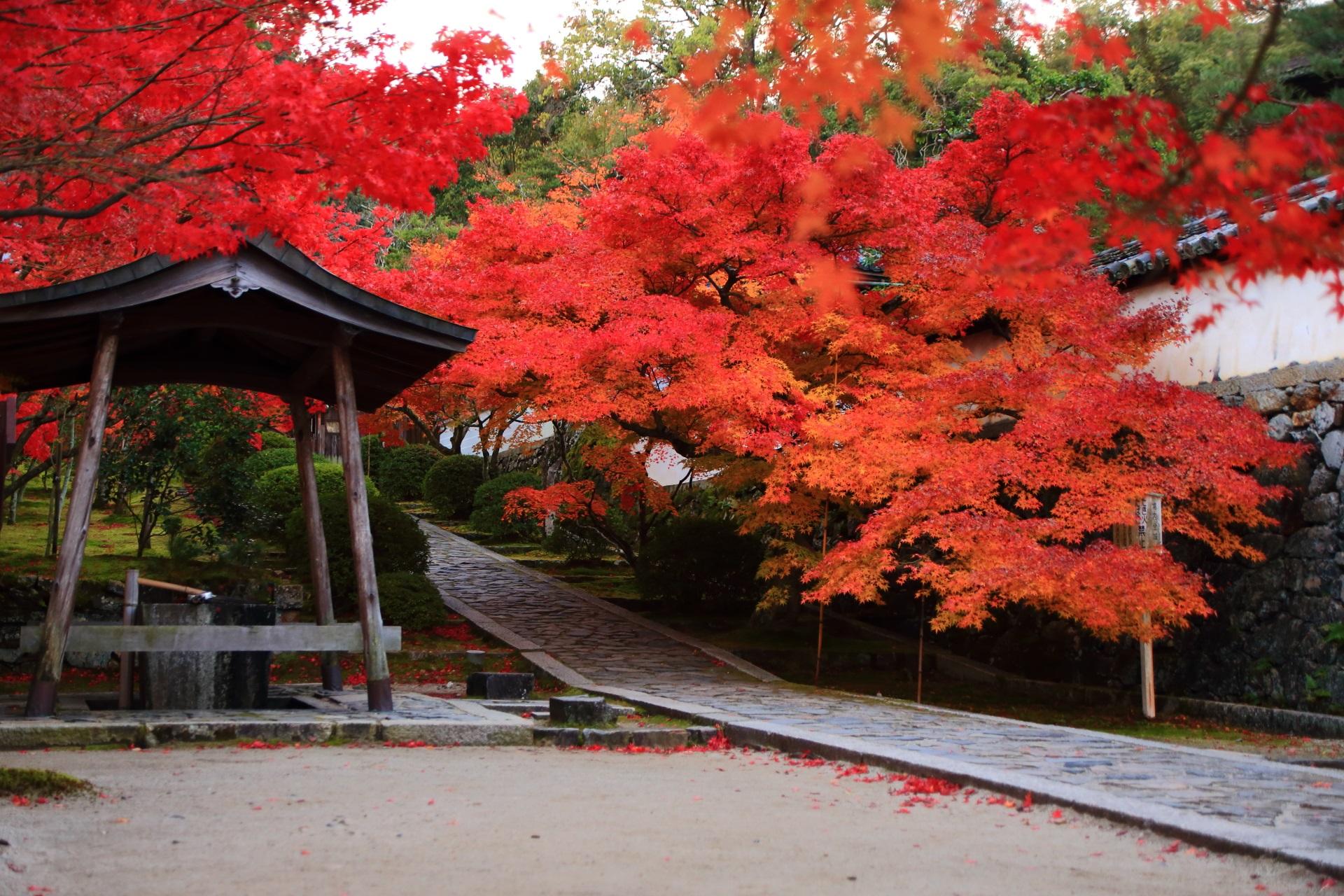 秋色につつまれた参道と手水舎