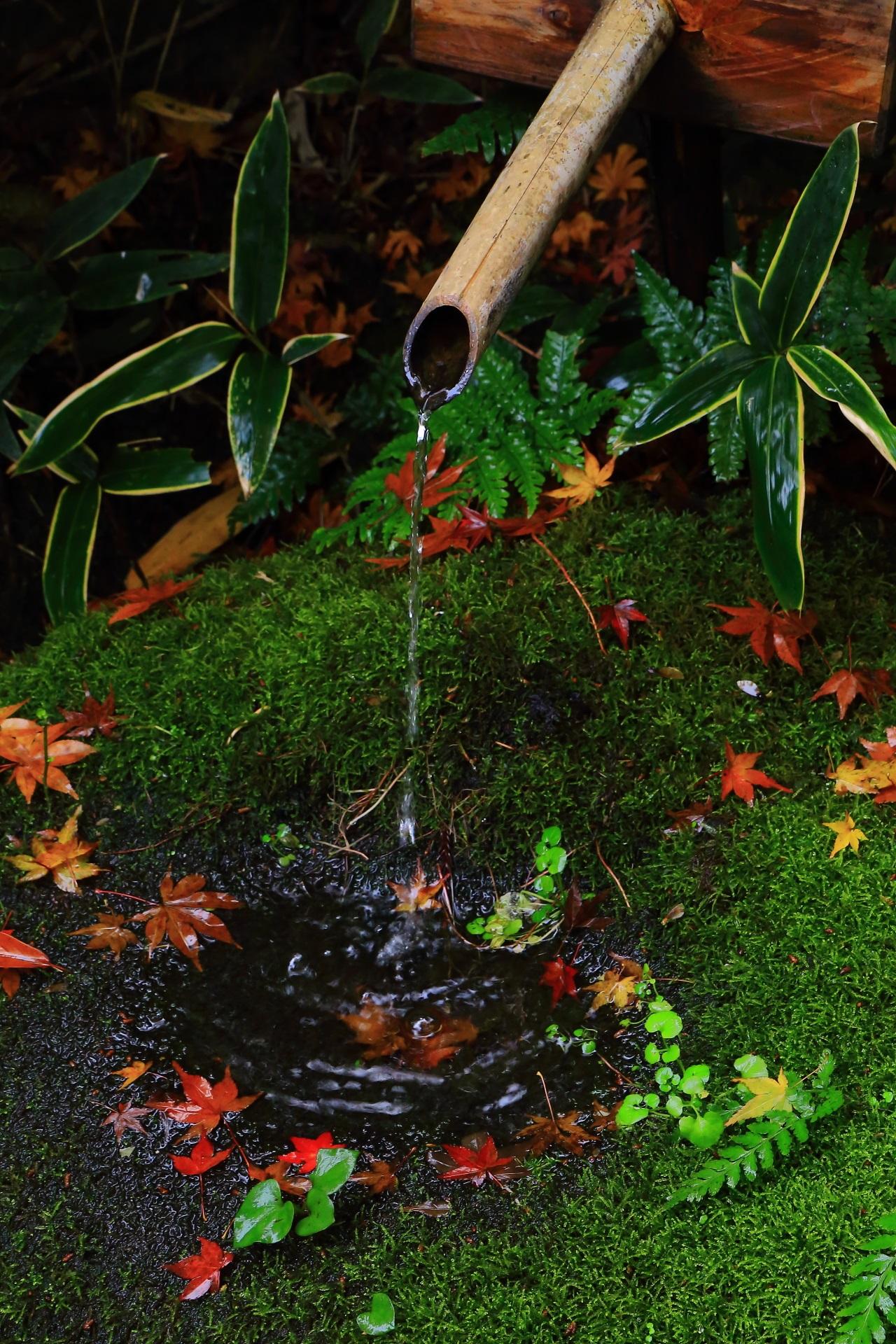 来迎院の含翆庭の素晴らしい紅葉と風情ある秋の情景