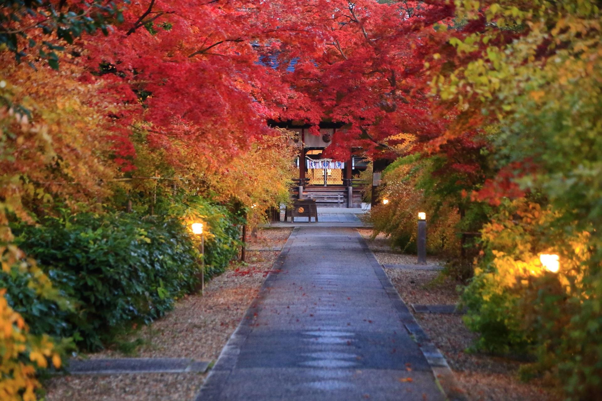 参道の明かりが演出する風情ある梨木神社の紅葉