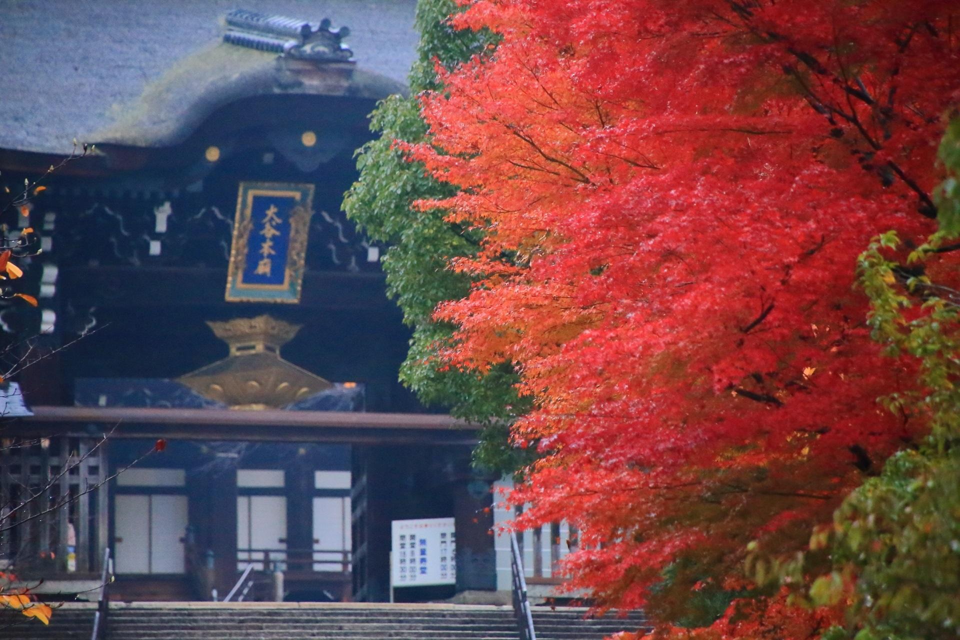 大谷本廟の総門を彩る真っ赤な紅葉
