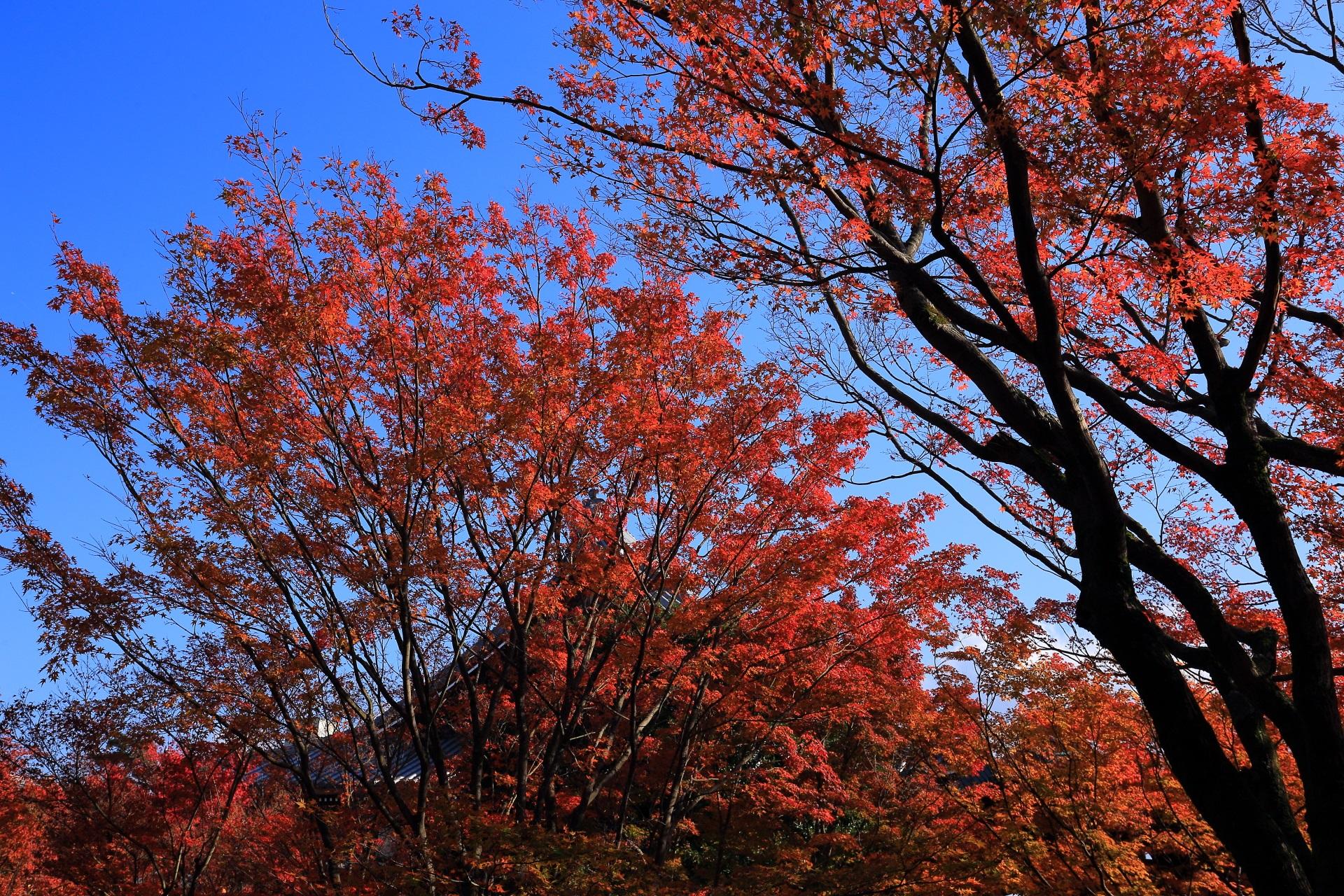 青空を染める溢れんばかりの輝く秋色