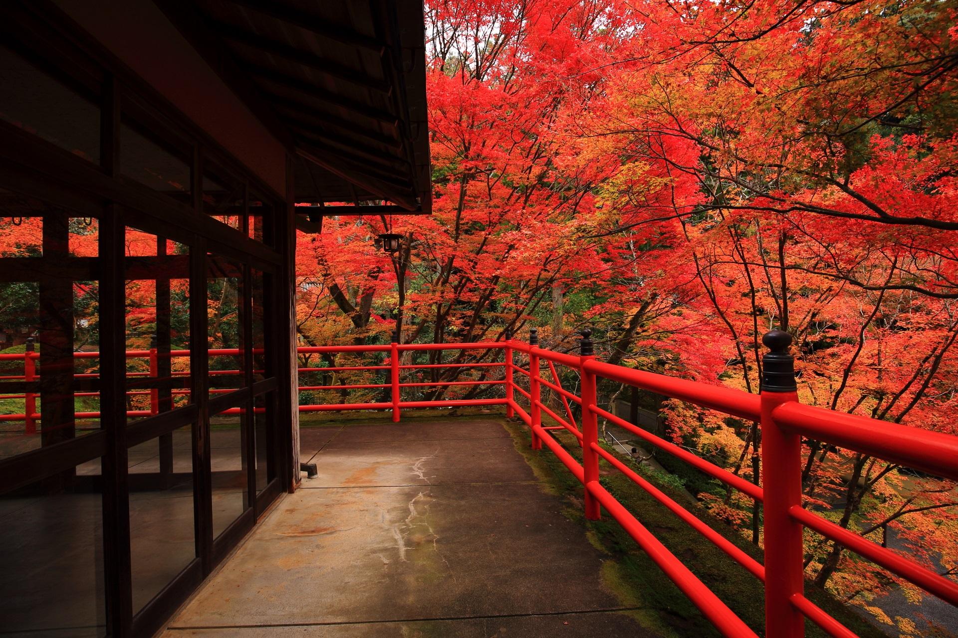 高画質 写真 紅葉 茶所 今熊野観音寺
