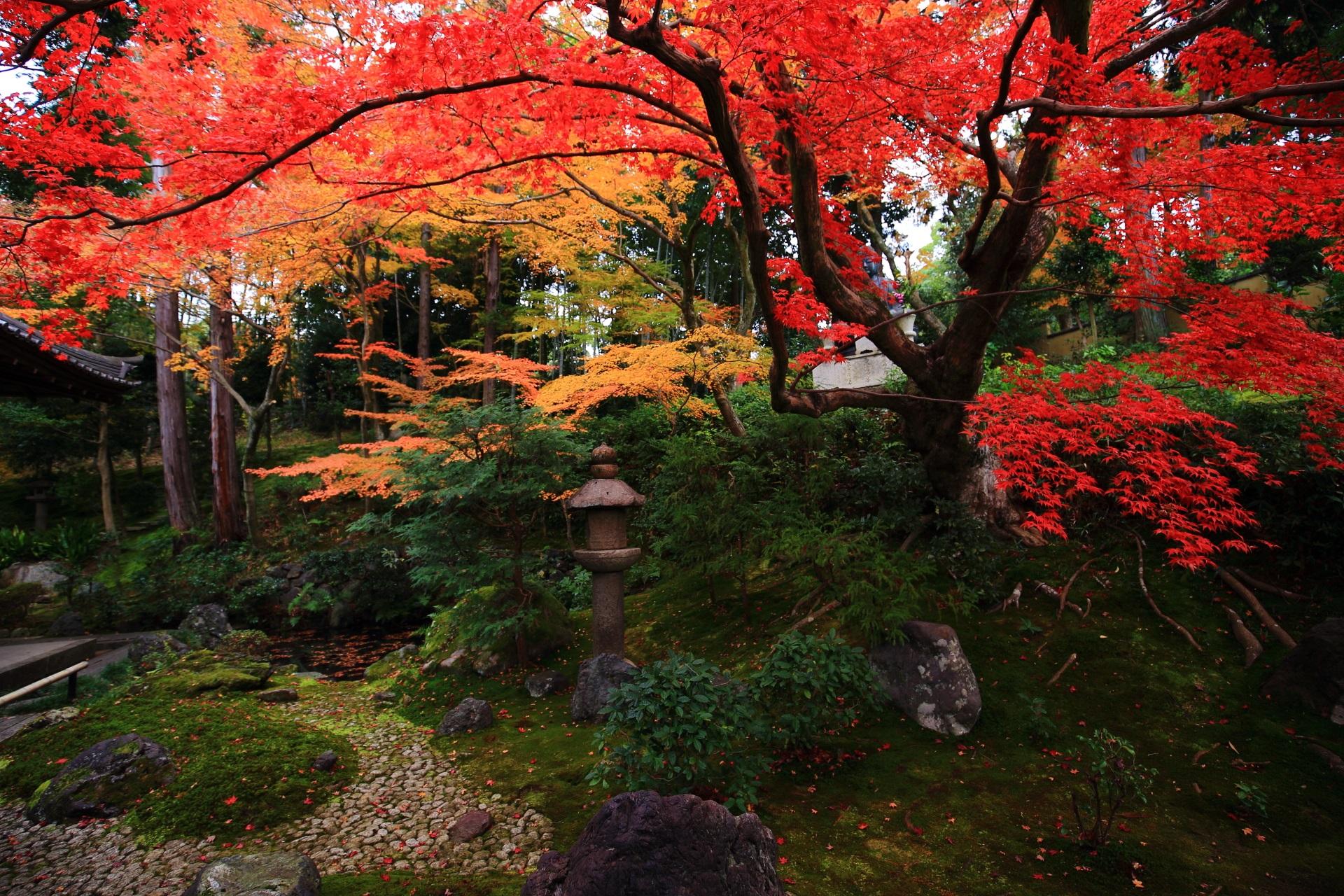 見事な秋色につつまれた隠れた名庭