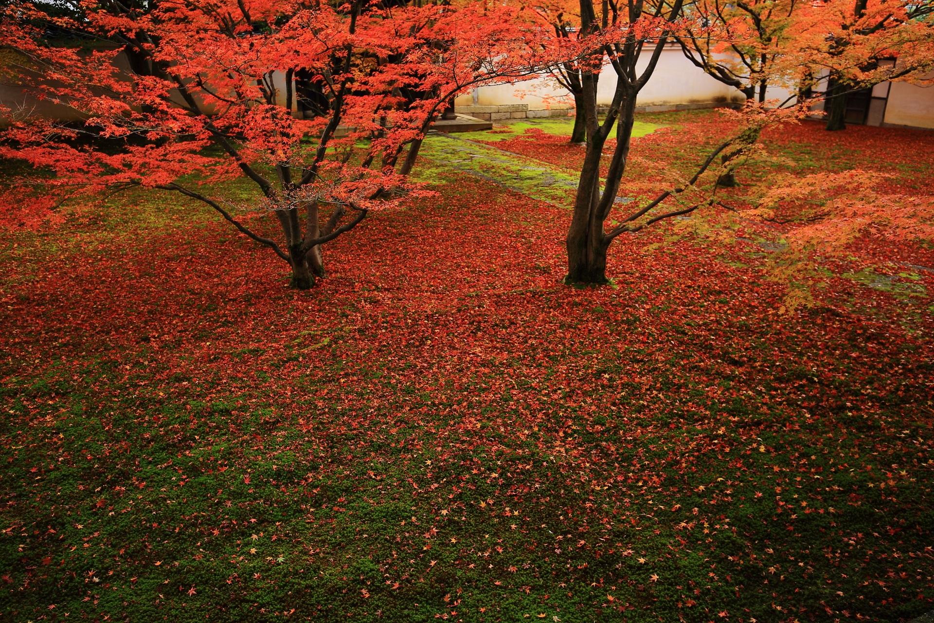 妙覚寺の緑の苔を彩る繊細で華やかな散り紅葉