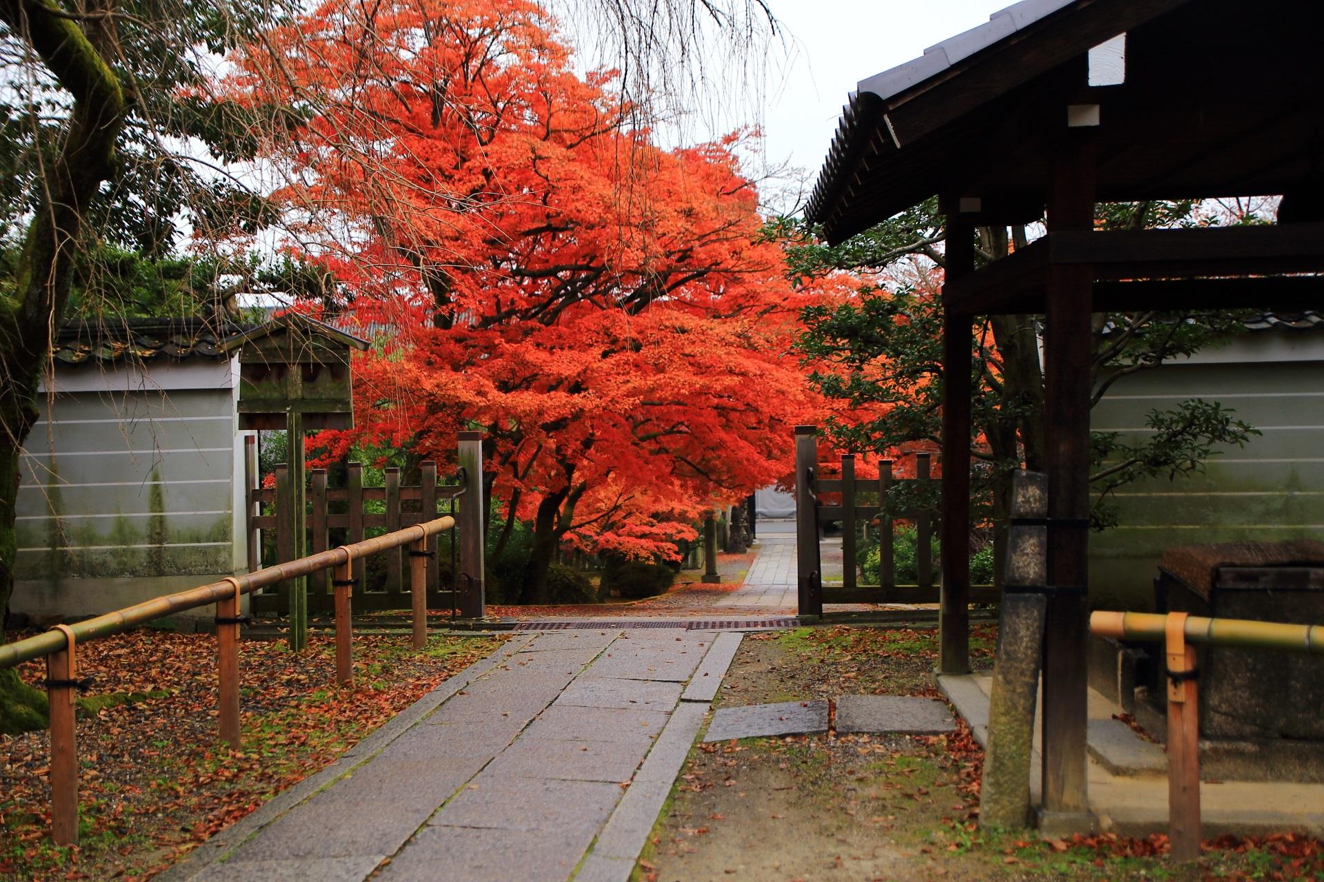 養源院の鐘楼や手水舎付近から眺めた参道の燃え上がるような紅葉