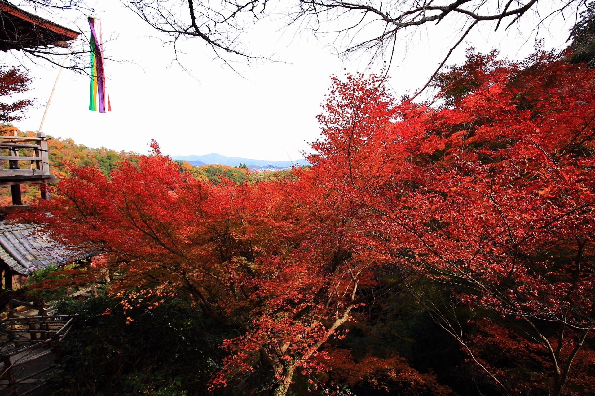 大悲閣千光寺の茶所と観音堂前に広がる燃え上がるような紅葉
