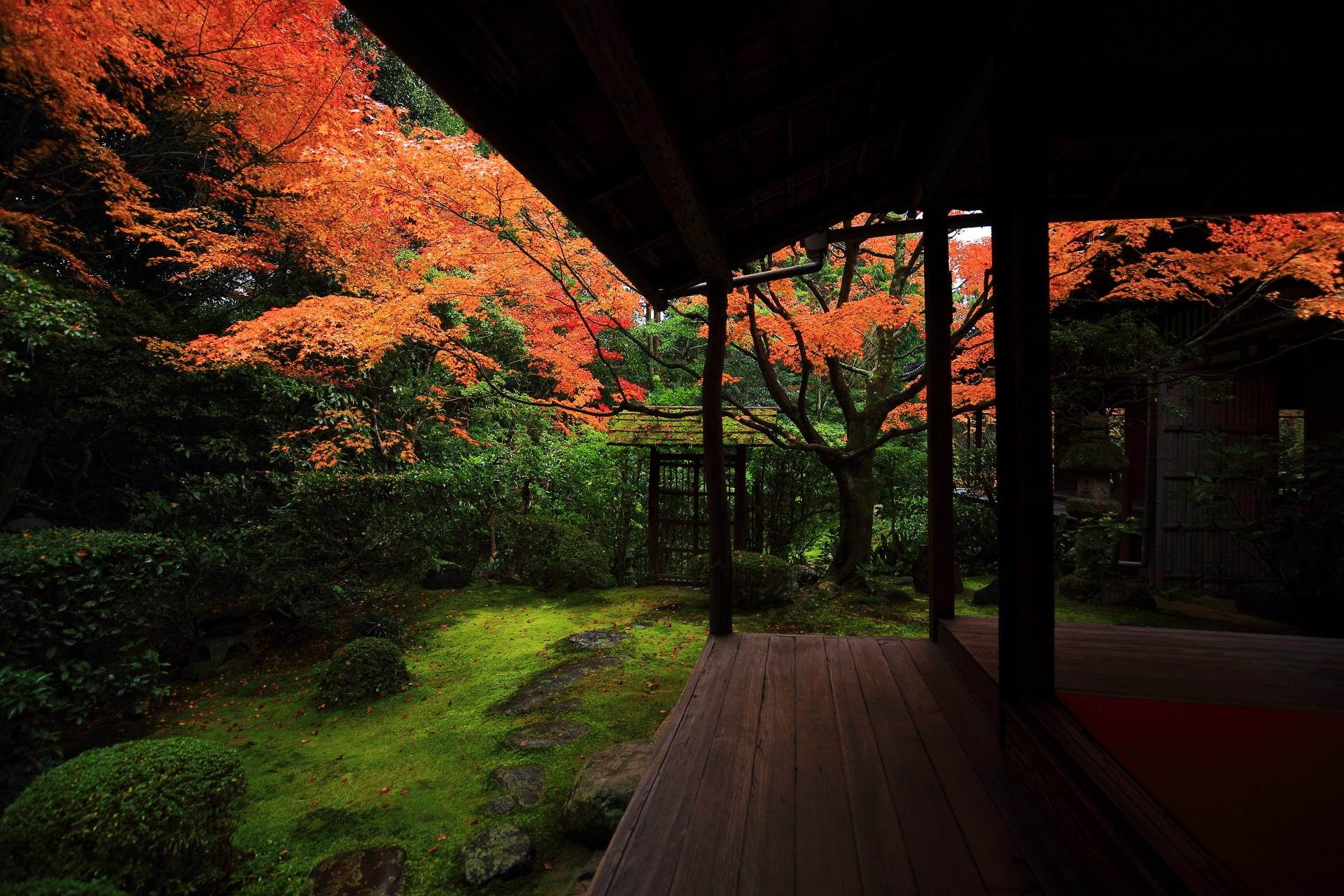 落ち着いた庭園で浮かび上がるように色づく綺麗な紅葉
