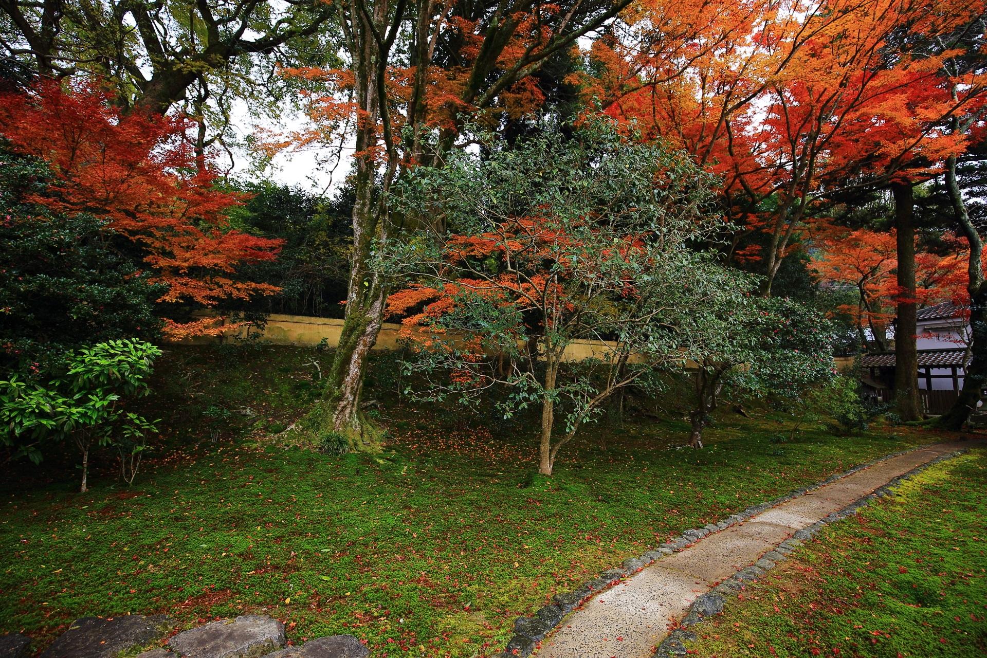淡い苔を華やぐ紅葉