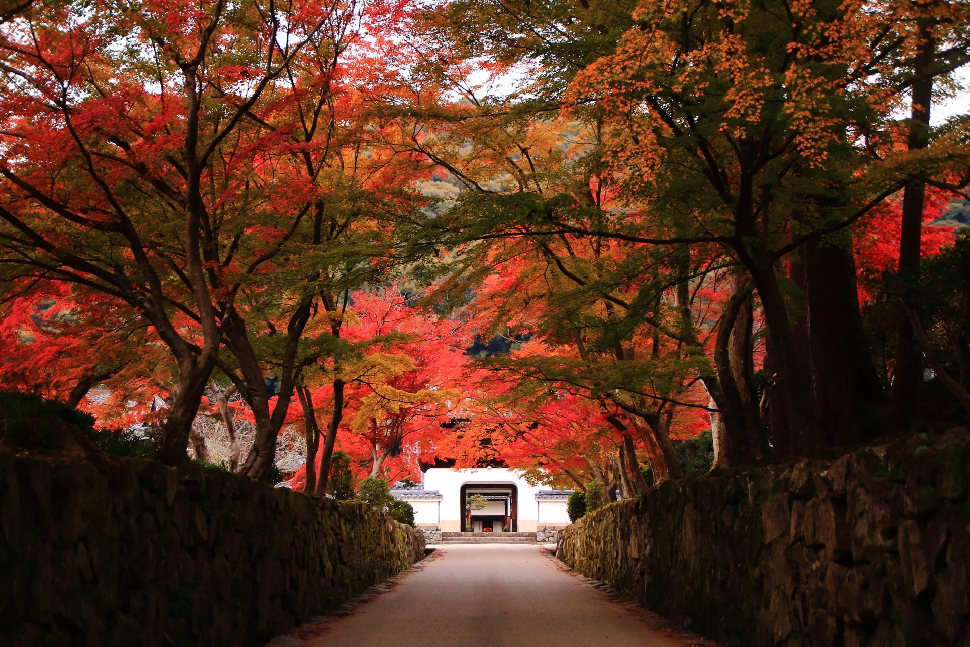 淡い紅葉に彩られた琴坂と興聖寺