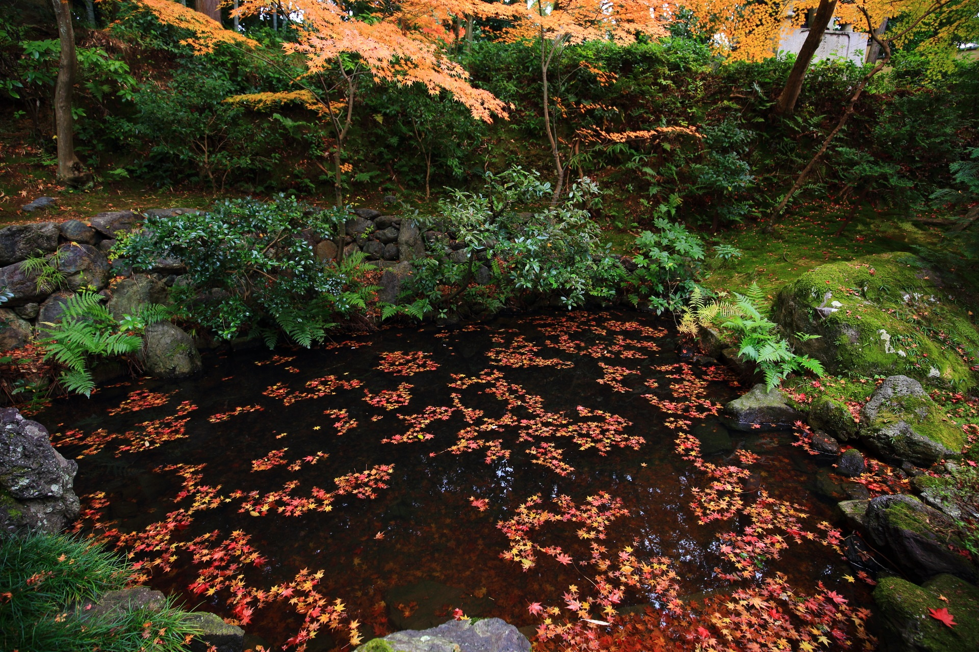 色とりどりの紅葉が華やかに散る池