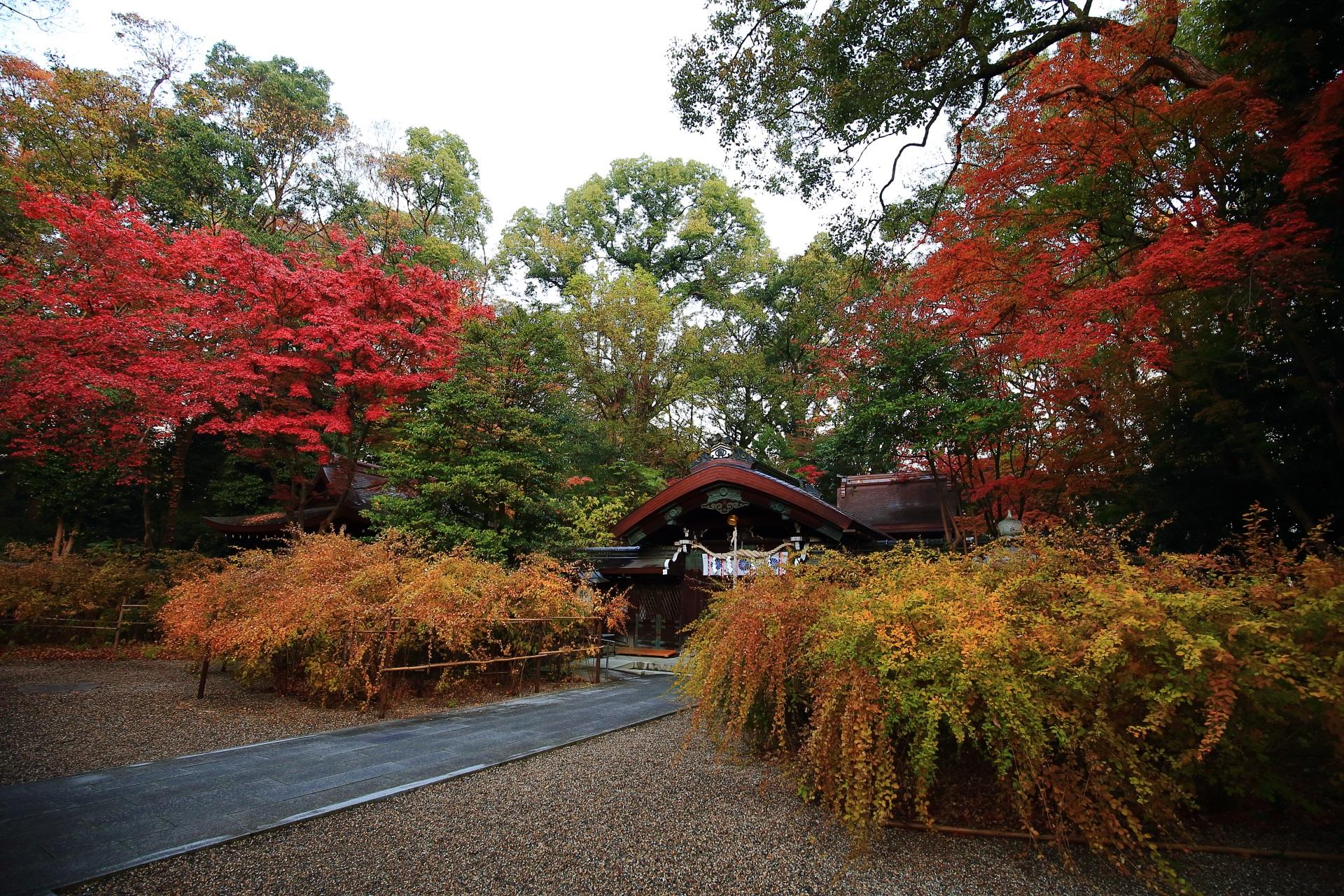 本殿を彩る鮮やかな赤い紅葉