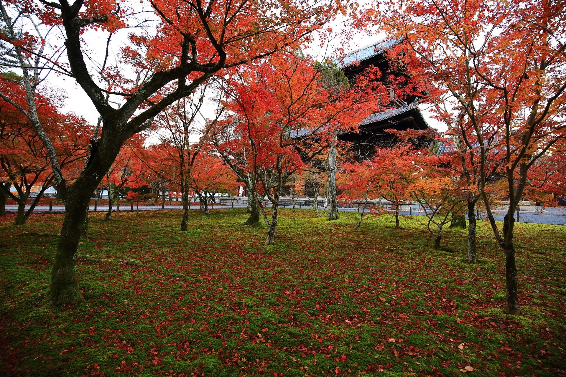 三門を背景にした紅葉と散りもみじ