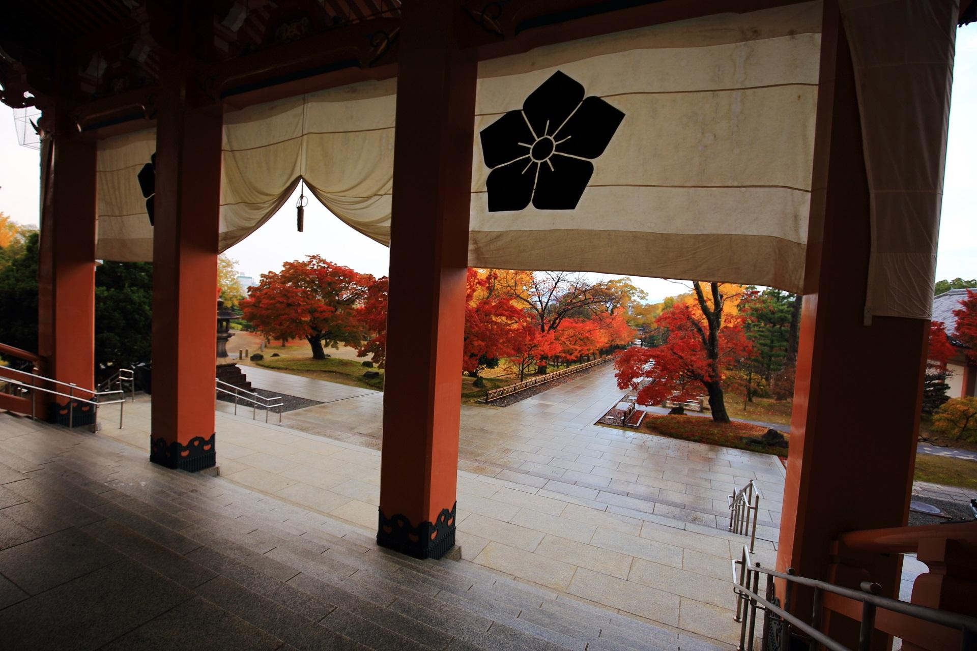 智積院の金堂から眺めた色とりどりの秋色に染まる雨で濡れた紅葉の参道