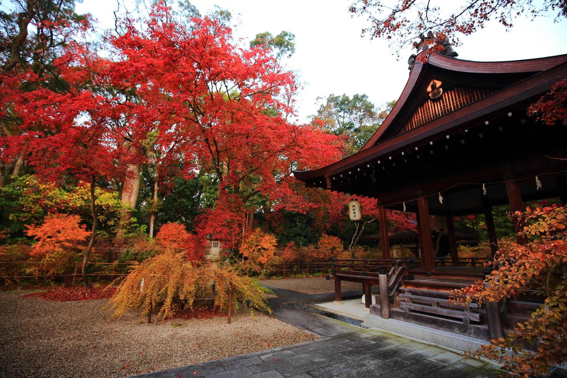 見事に色づいた紅葉と拝殿