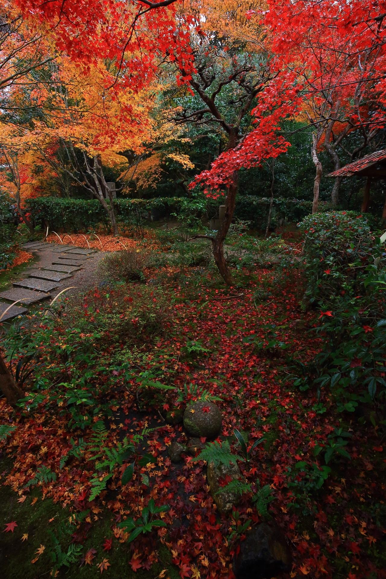 厭離庵の豪快な紅葉と雨で潤う散りもみじ