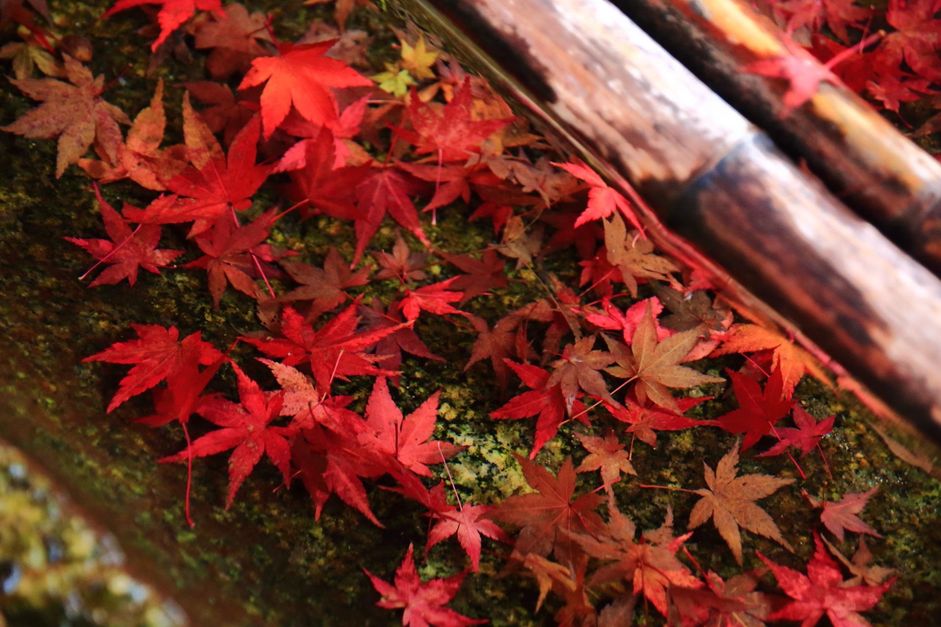 手水舎の水に沈む散り紅葉