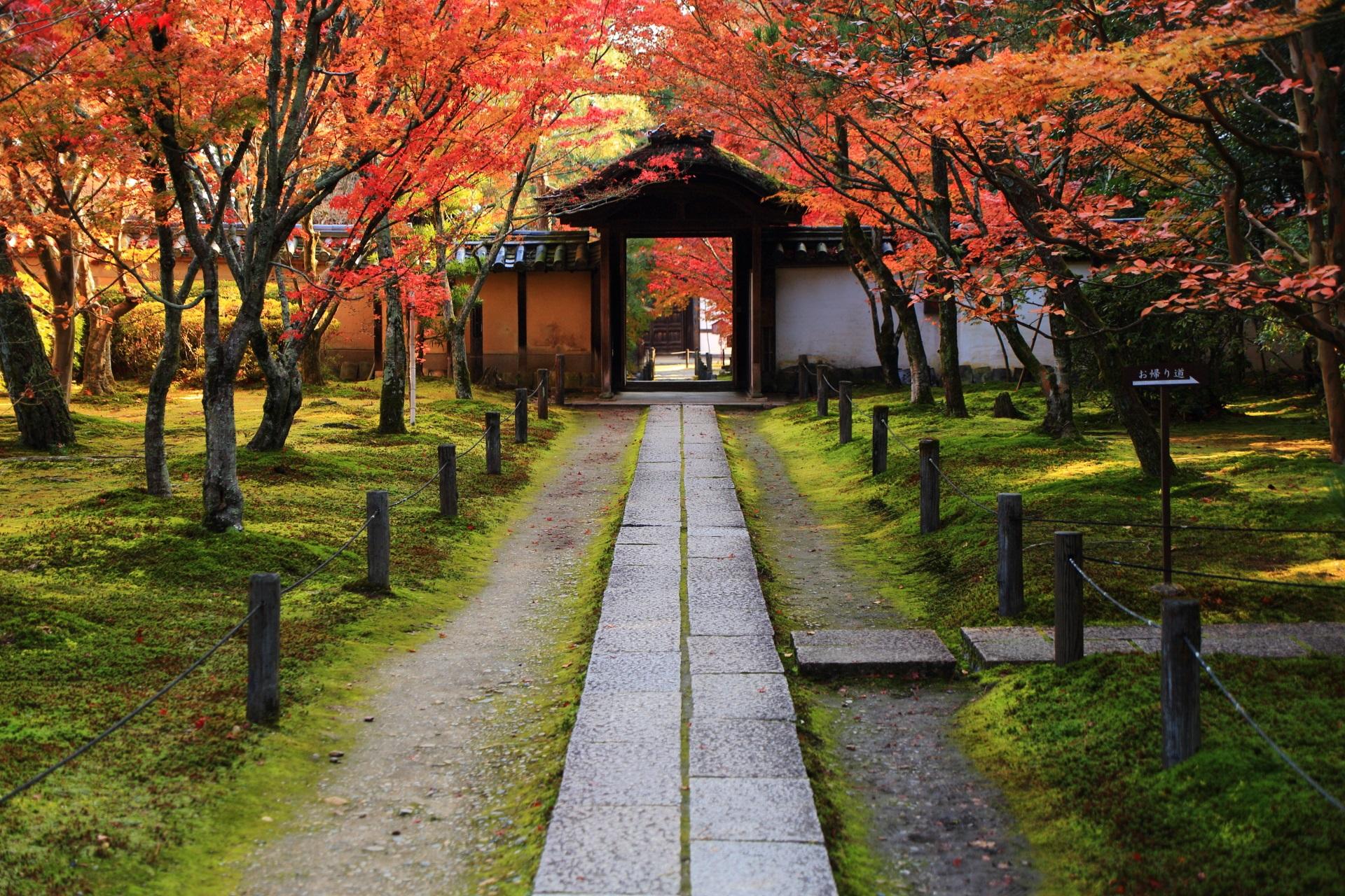 本堂側から眺めた中門と参道の紅葉
