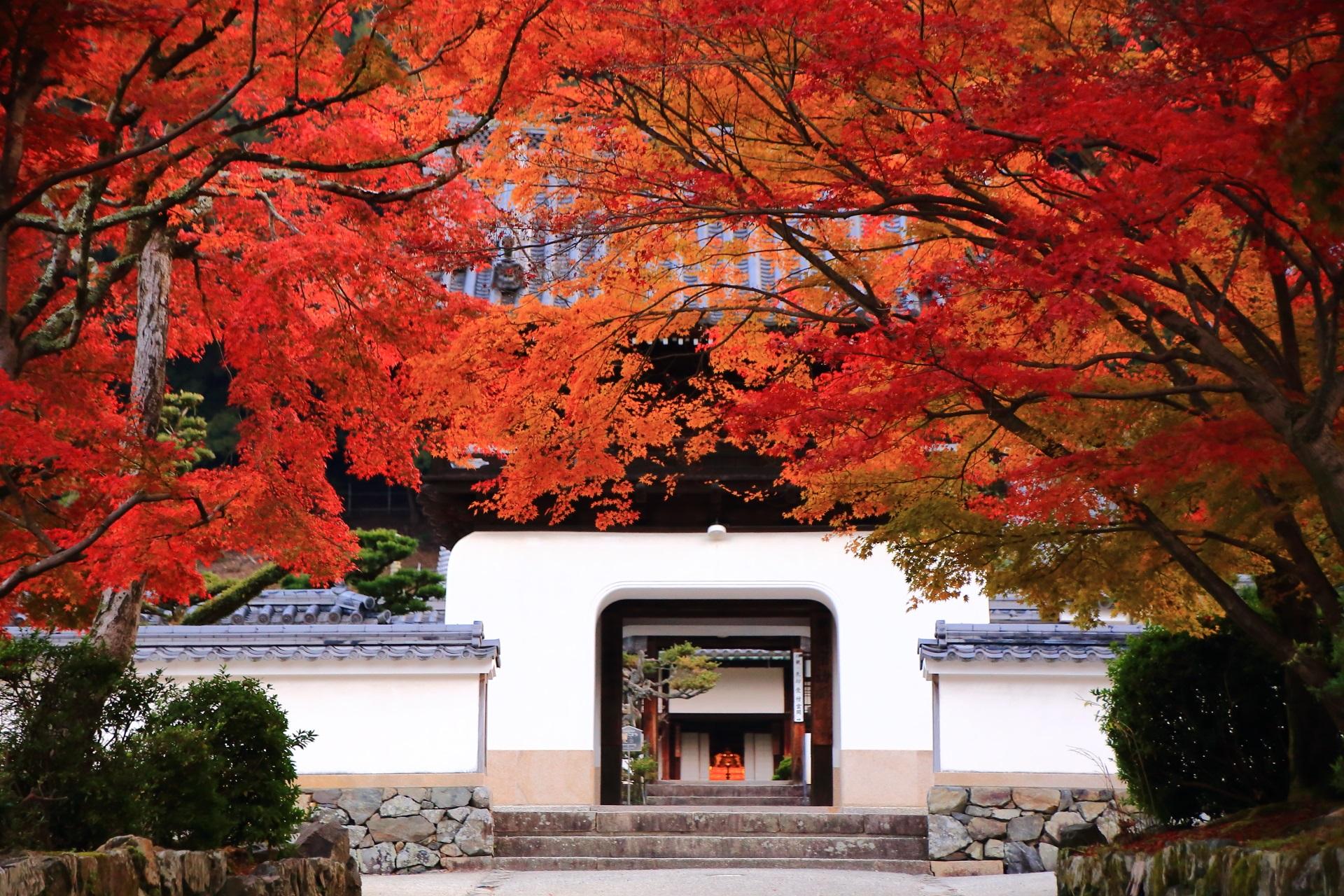 興聖寺の独特の形をした白い山門に映える琴坂の見事な紅葉