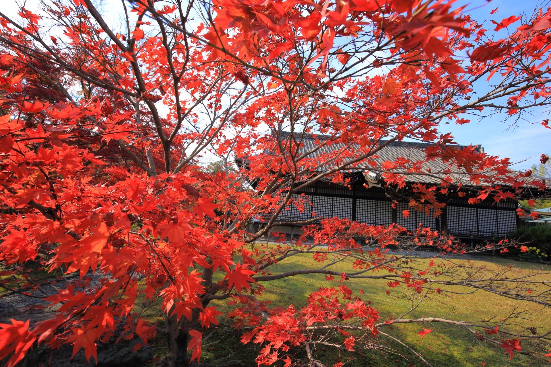 宸殿を真っ赤にそめる紅葉